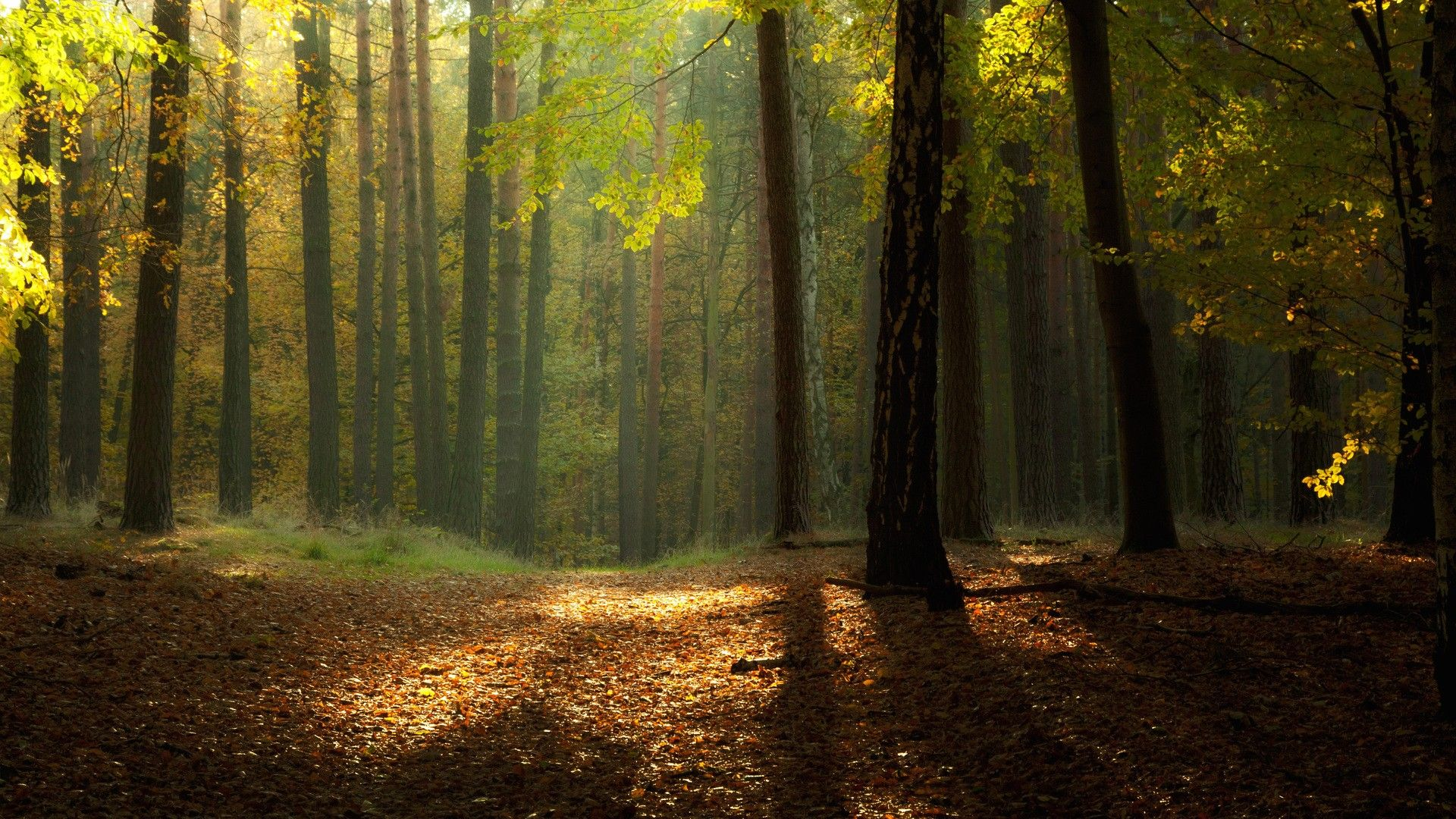 Forest Landscape Wallpapers For Android | emy elbadry | Pinterest ...