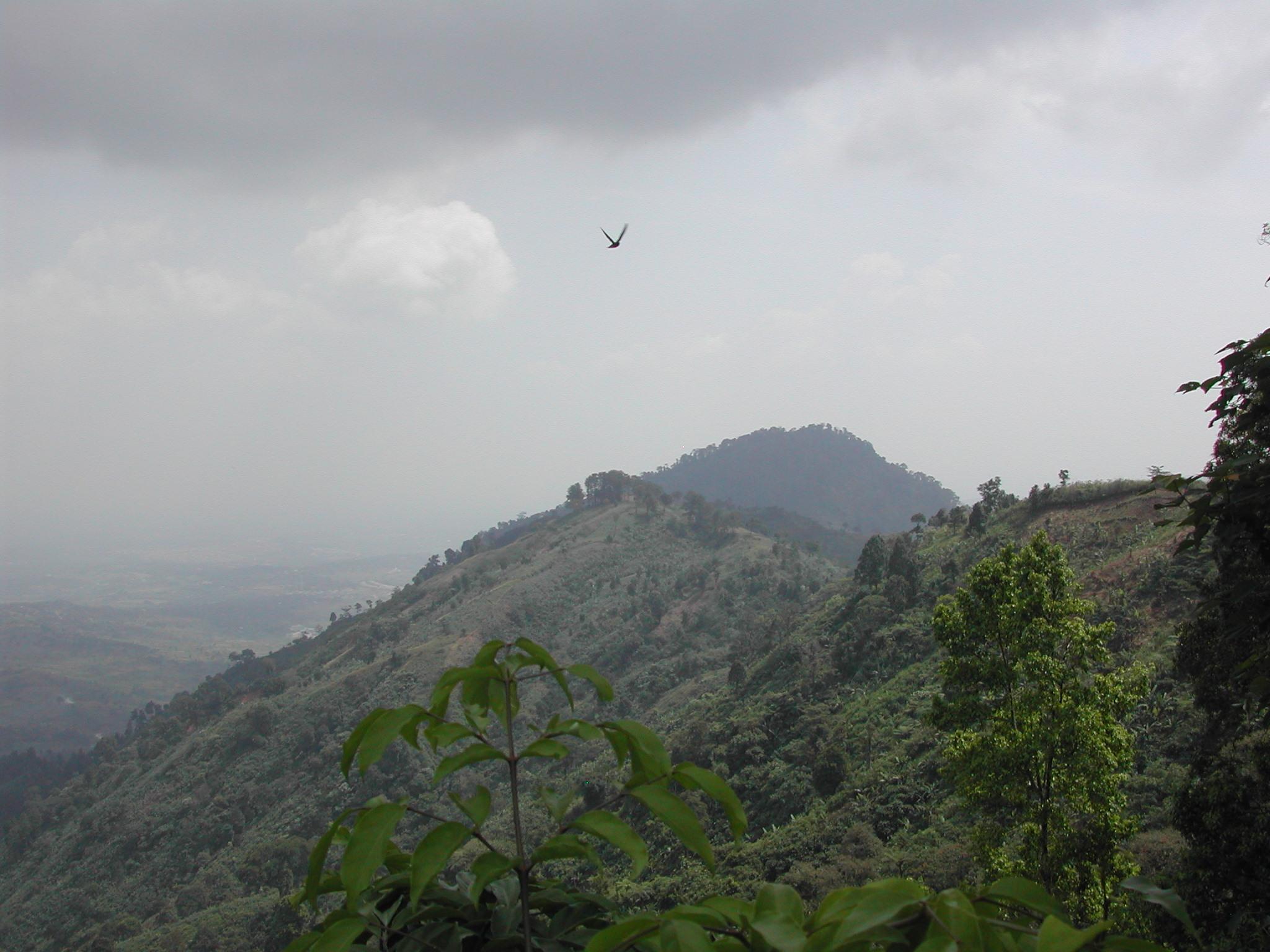 Forest landscape photo