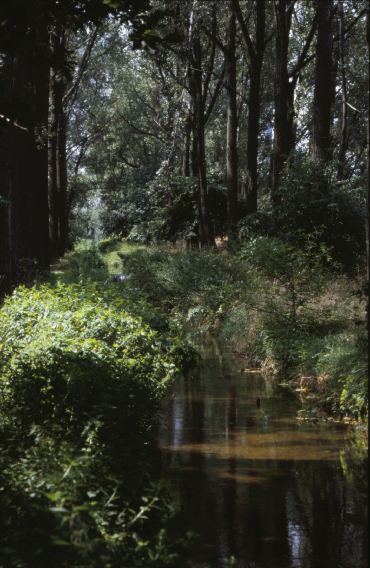 Forest landscape, Forest, Green, Landscape, Nature, HQ Photo