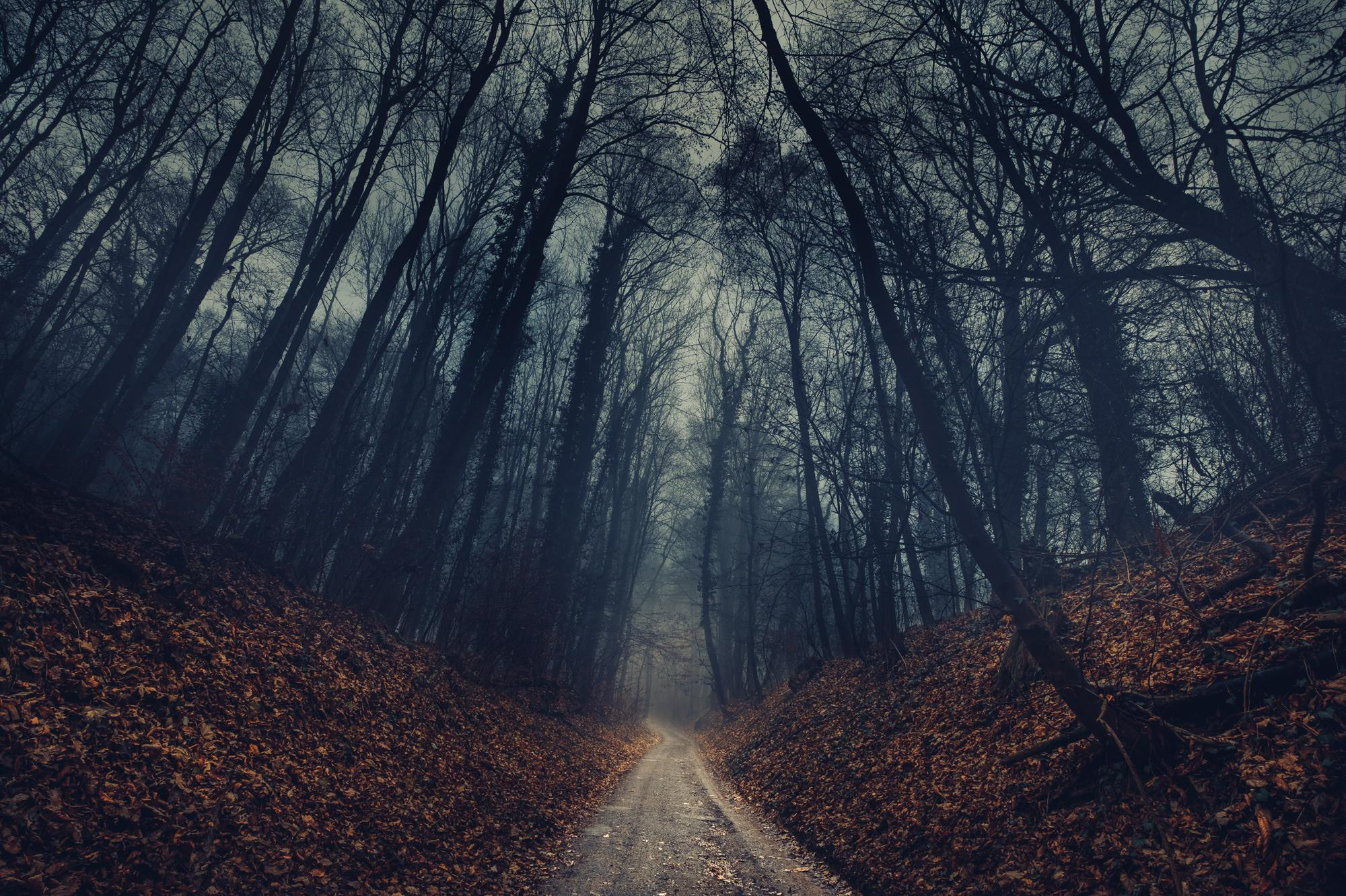 Free Photo Forest Path Dark Forest Nature Free
