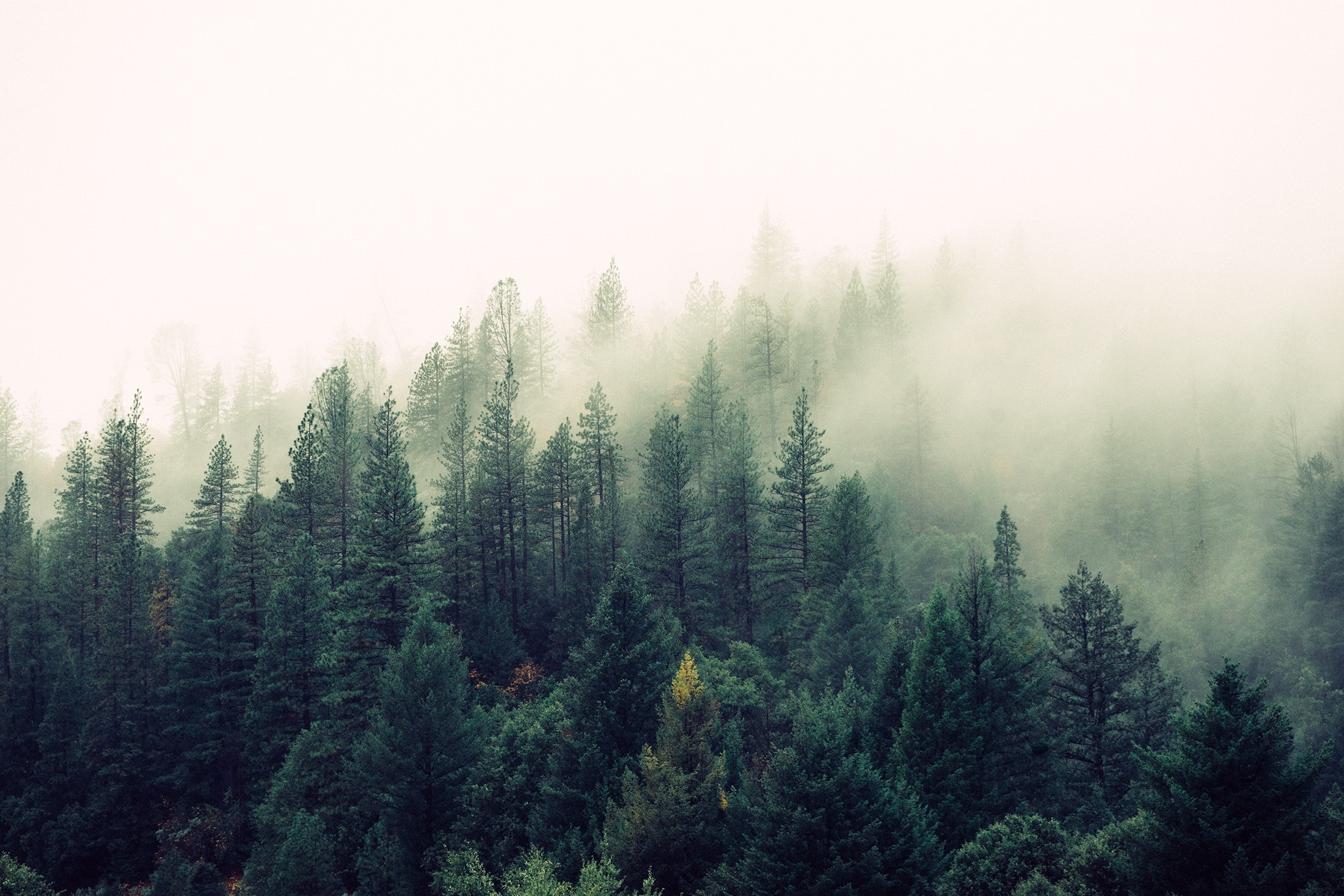 Free stock photo of fog, foggy, forest