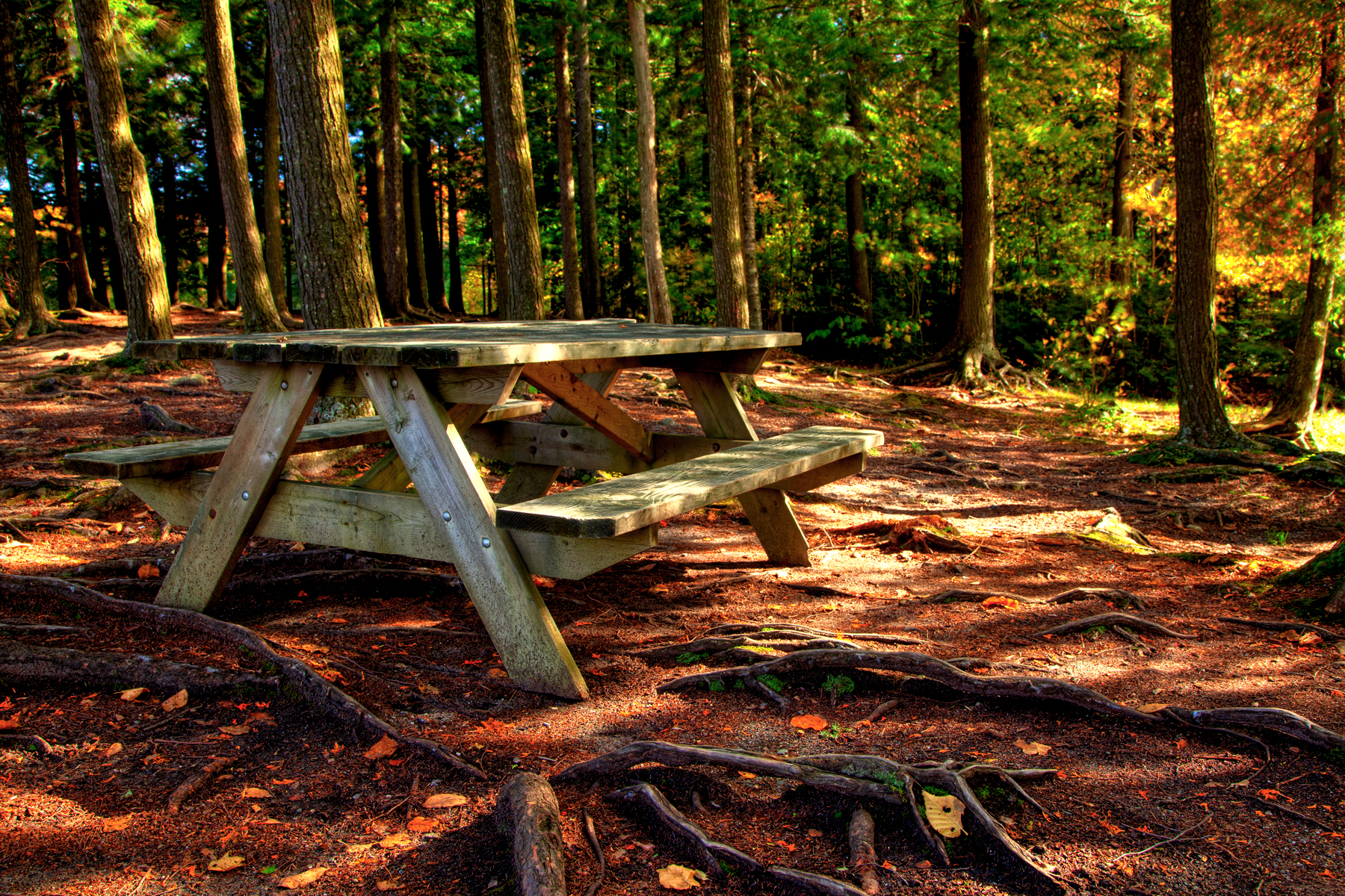 Forest picnic table - hdr photo