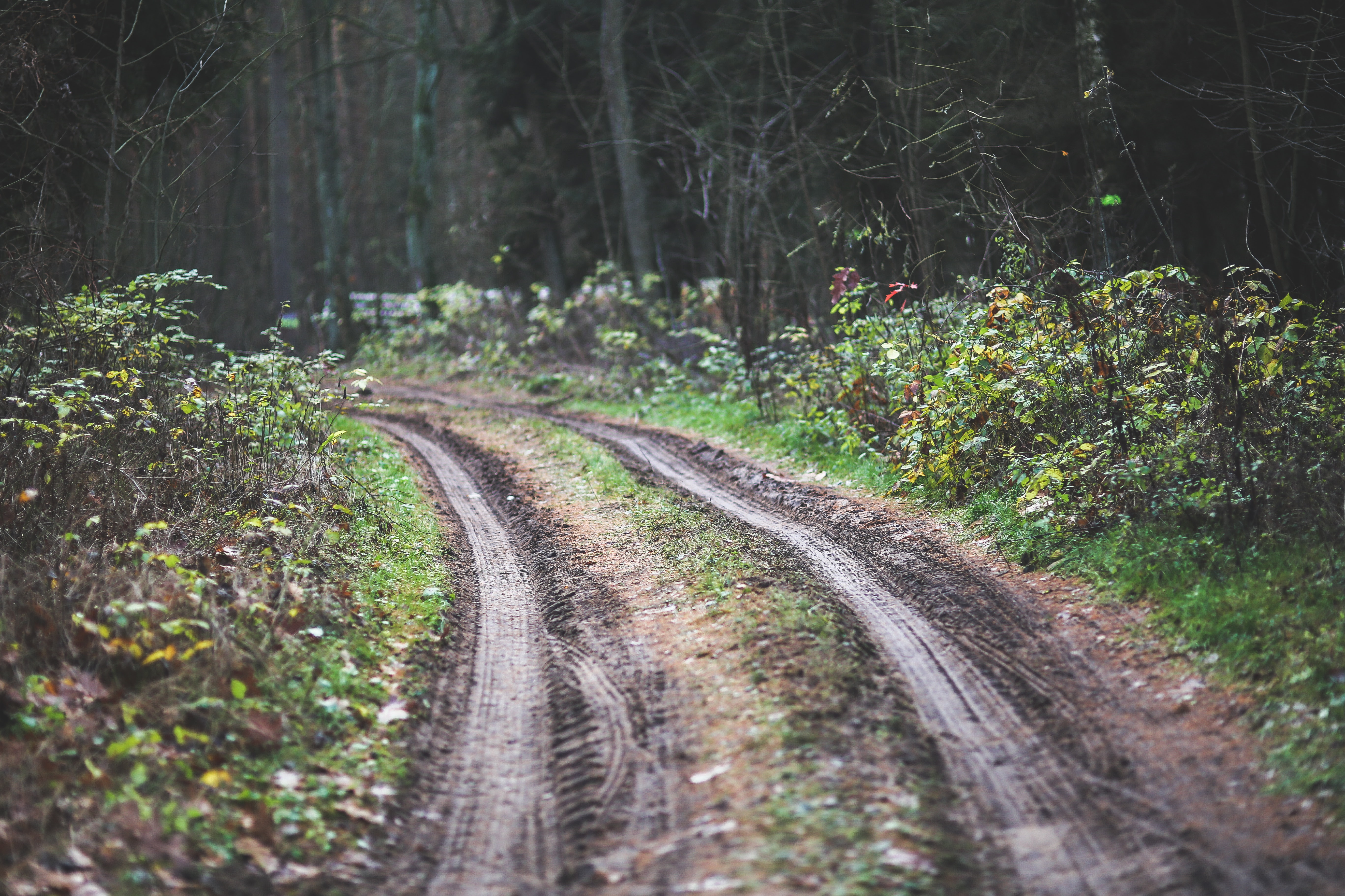 Forest road, Dirty, Forest, Mud, Off-road, HQ Photo