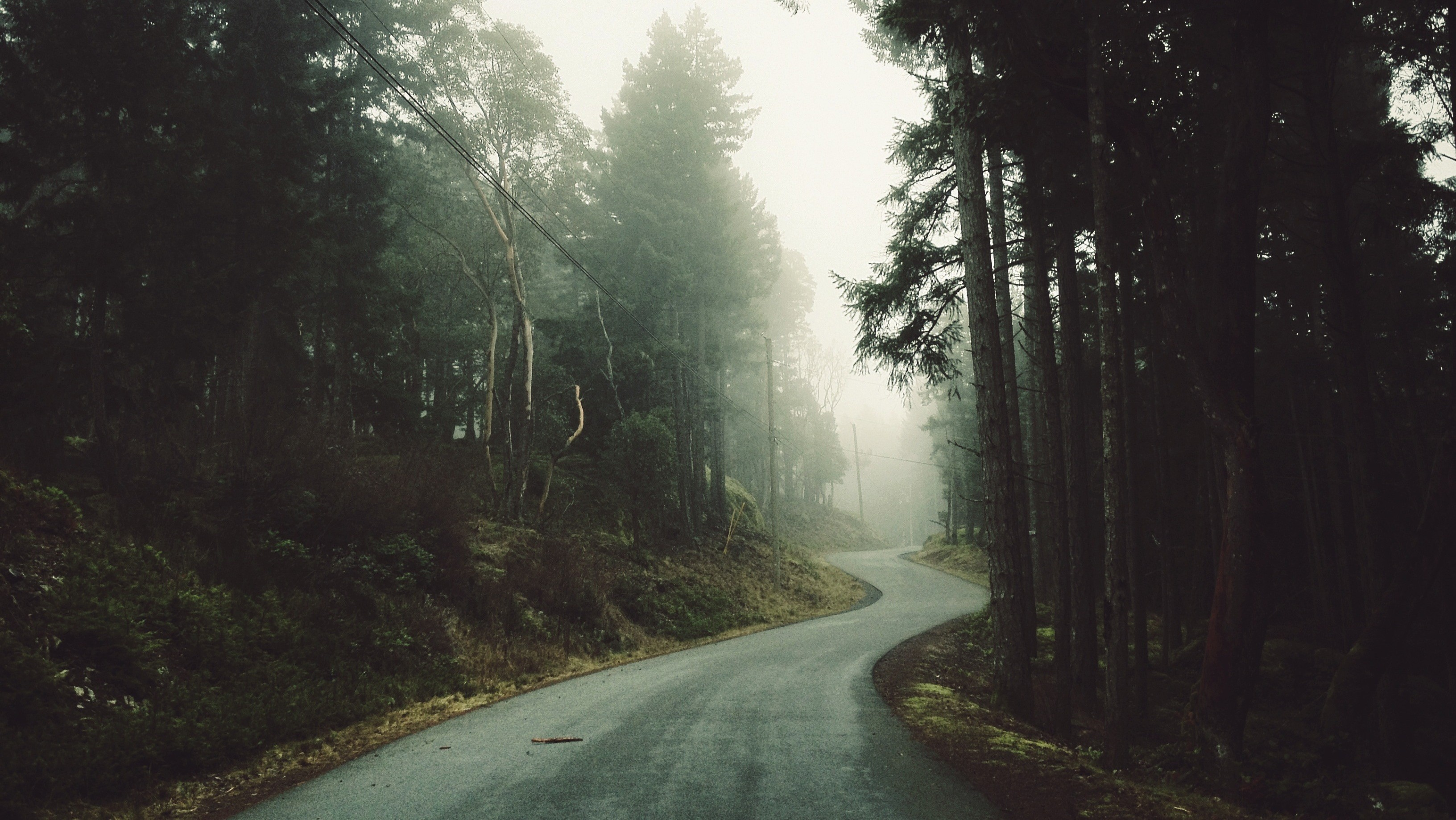 Forest Road | Cool Wallpapers