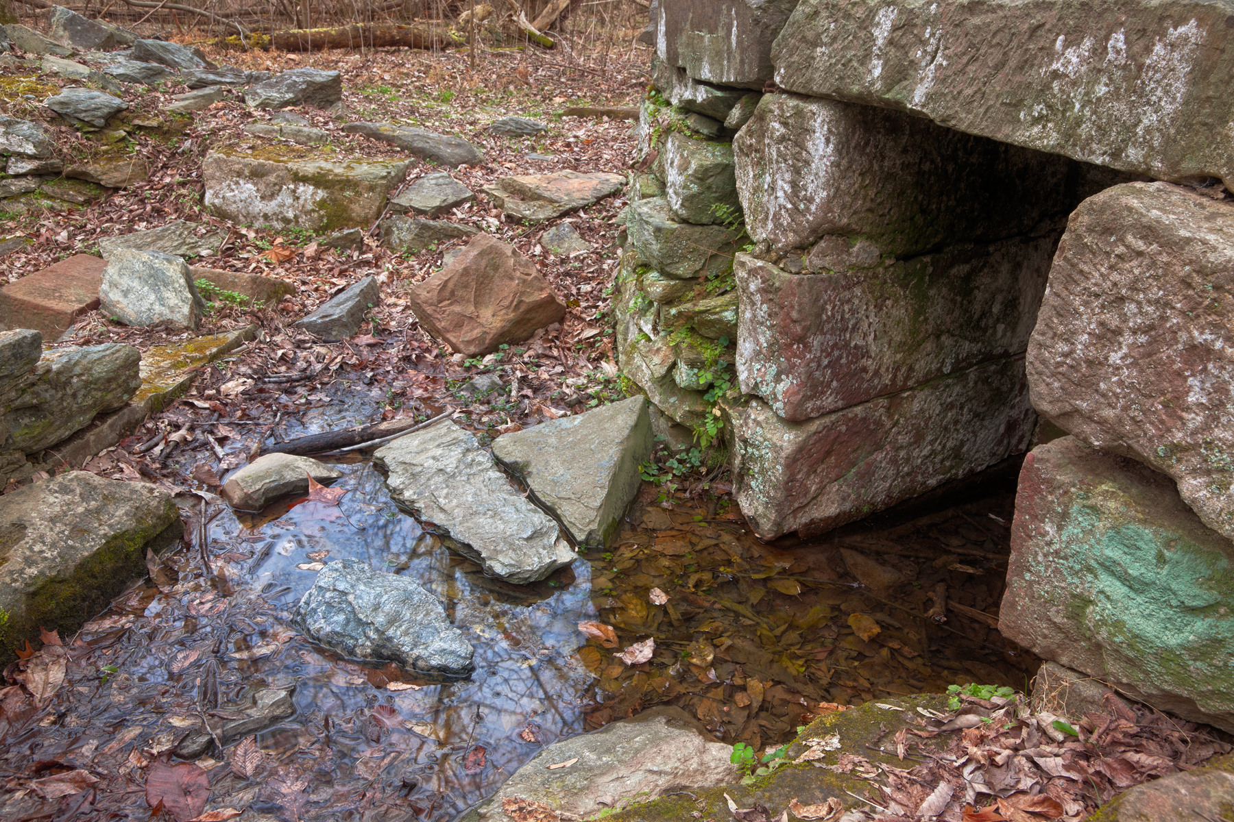 Forest ruins - hdr photo