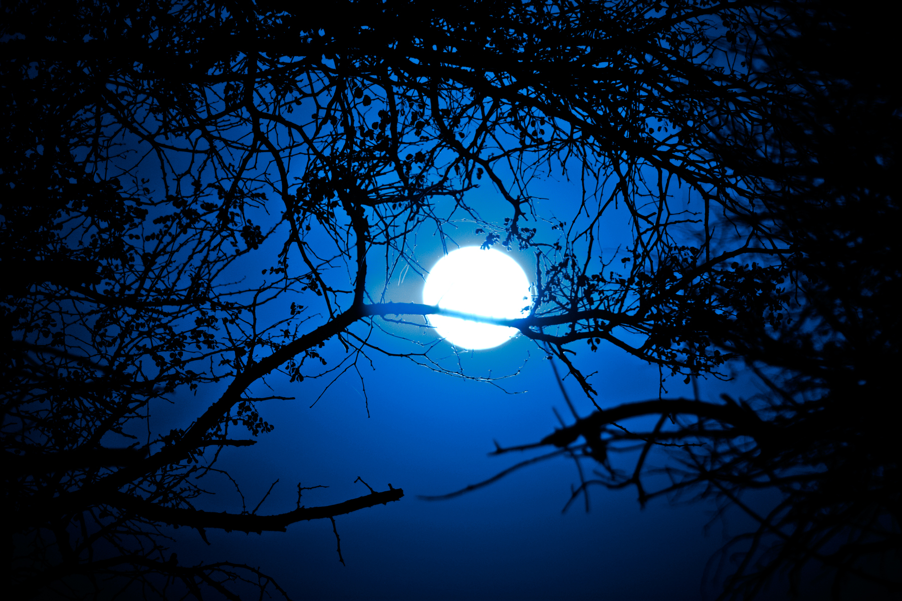 Forest Sunrise - Midnight Blue, Africa, Park, Resource, Res, HQ Photo