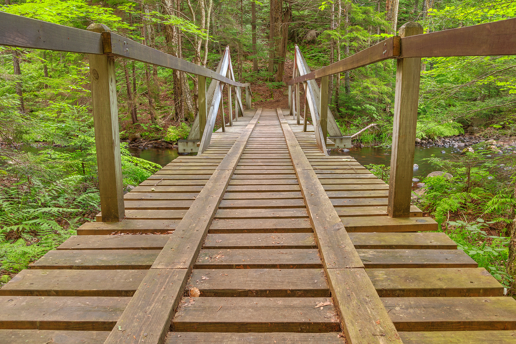 Forest track bridge - hdr photo