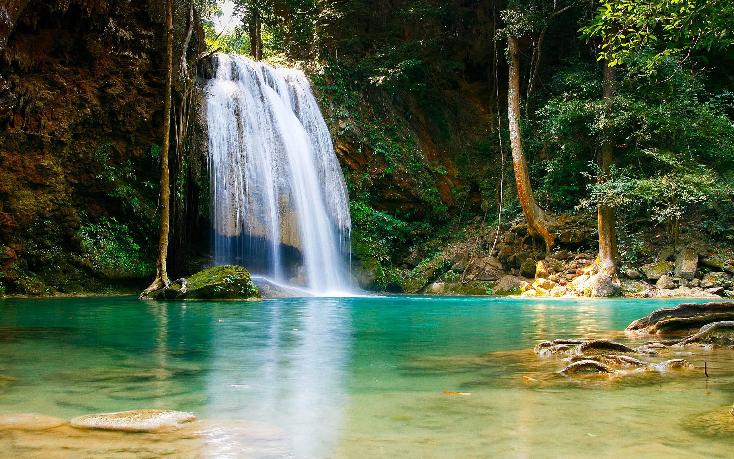 Waterfalls: Nature Forest Water Waterfalls Animal Jungle Leaf Falls ...