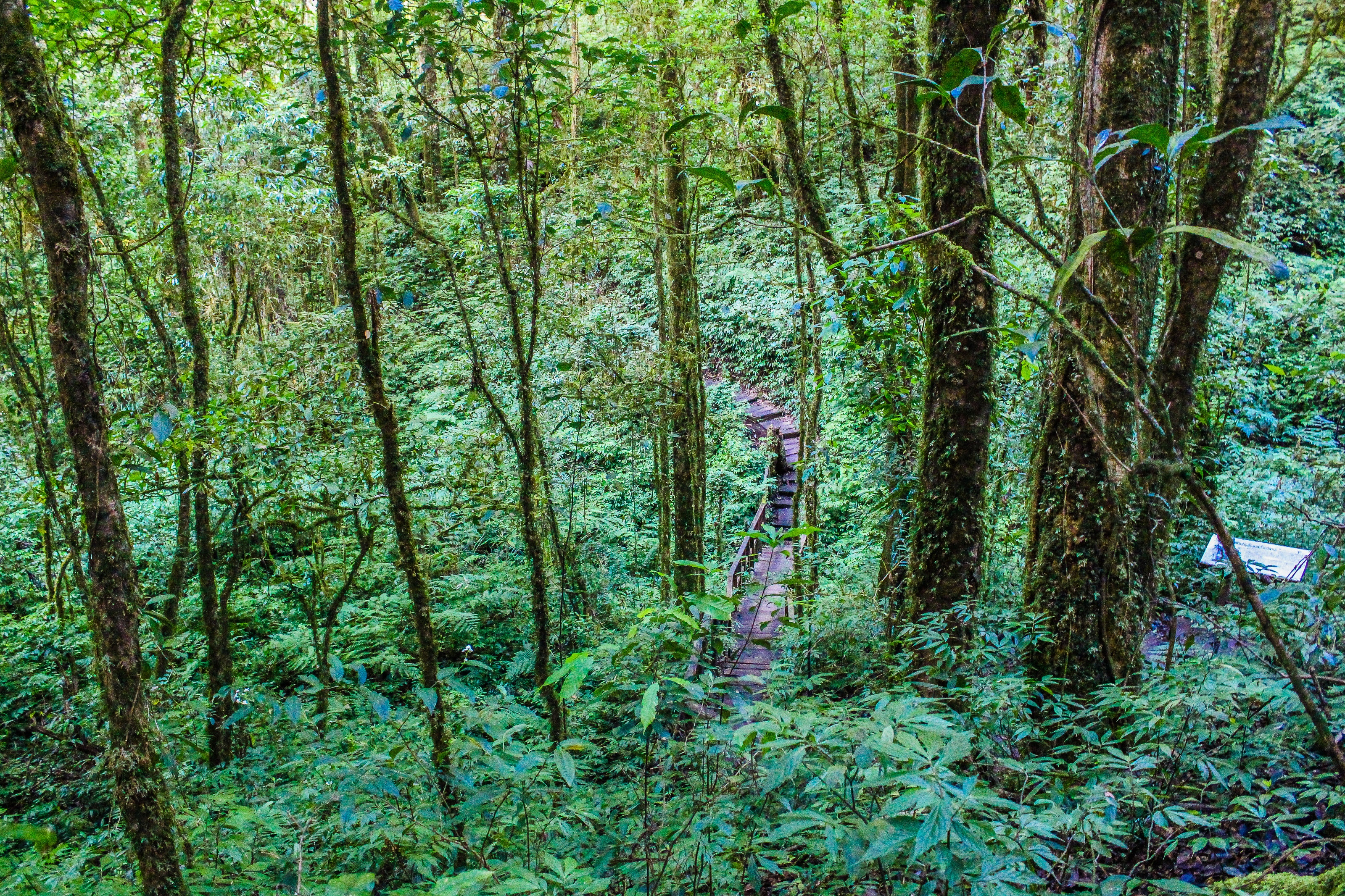 Forest with green plants and trees photo
