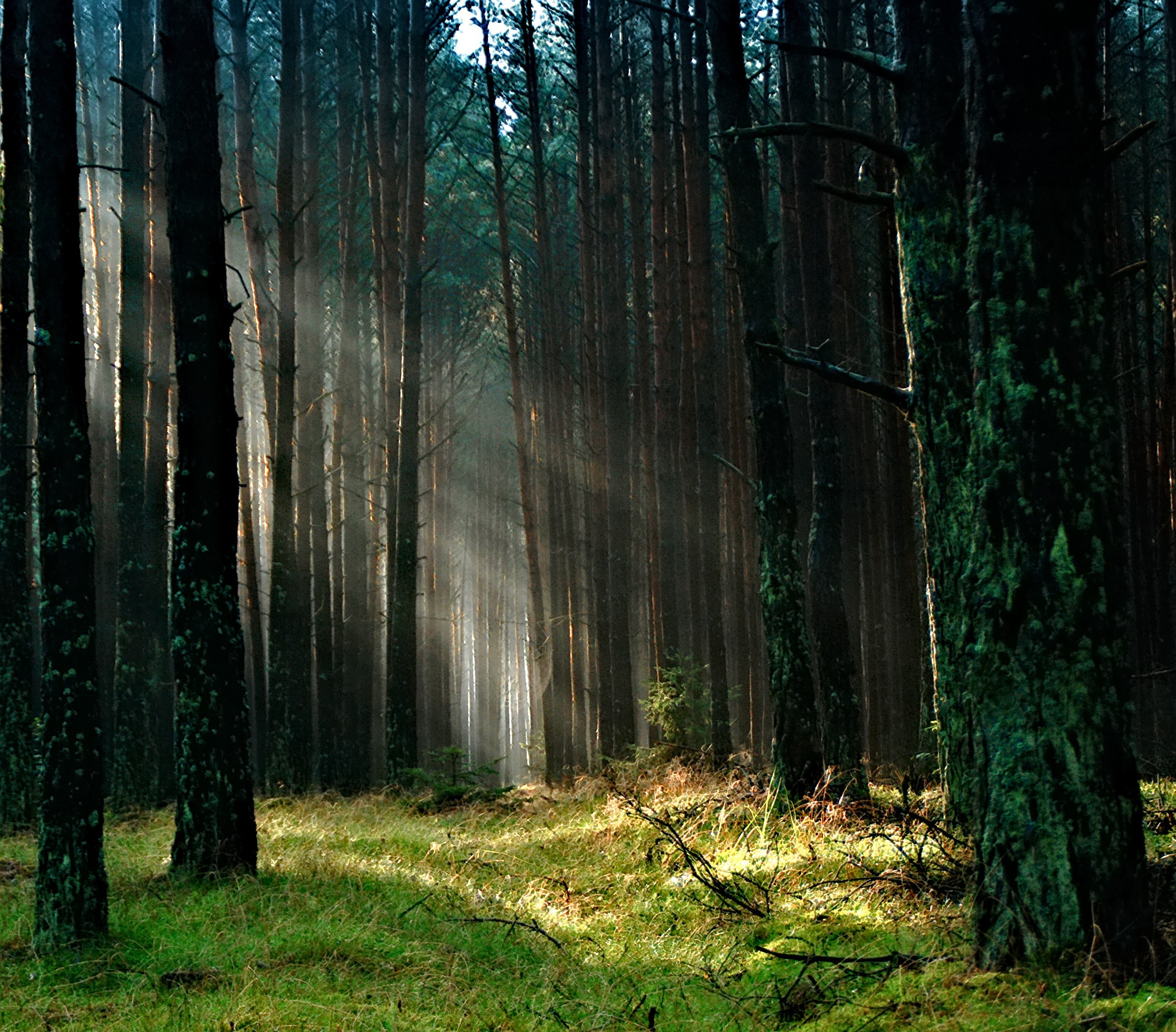 Forest With Sunlight, Woods, Trees, Sunlight, Grass, HQ Photo