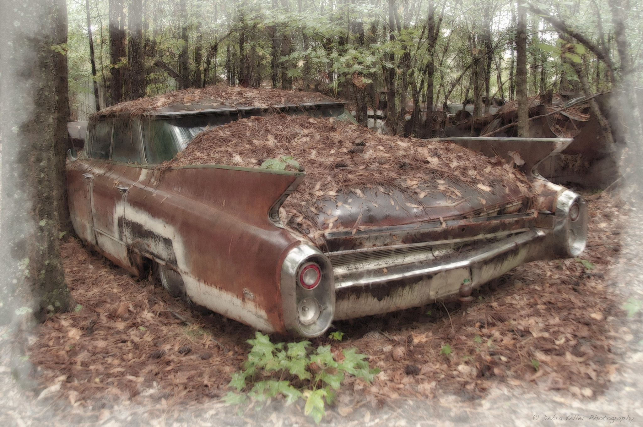 The Cars Lost And Forgotten « Debra Faith Keller