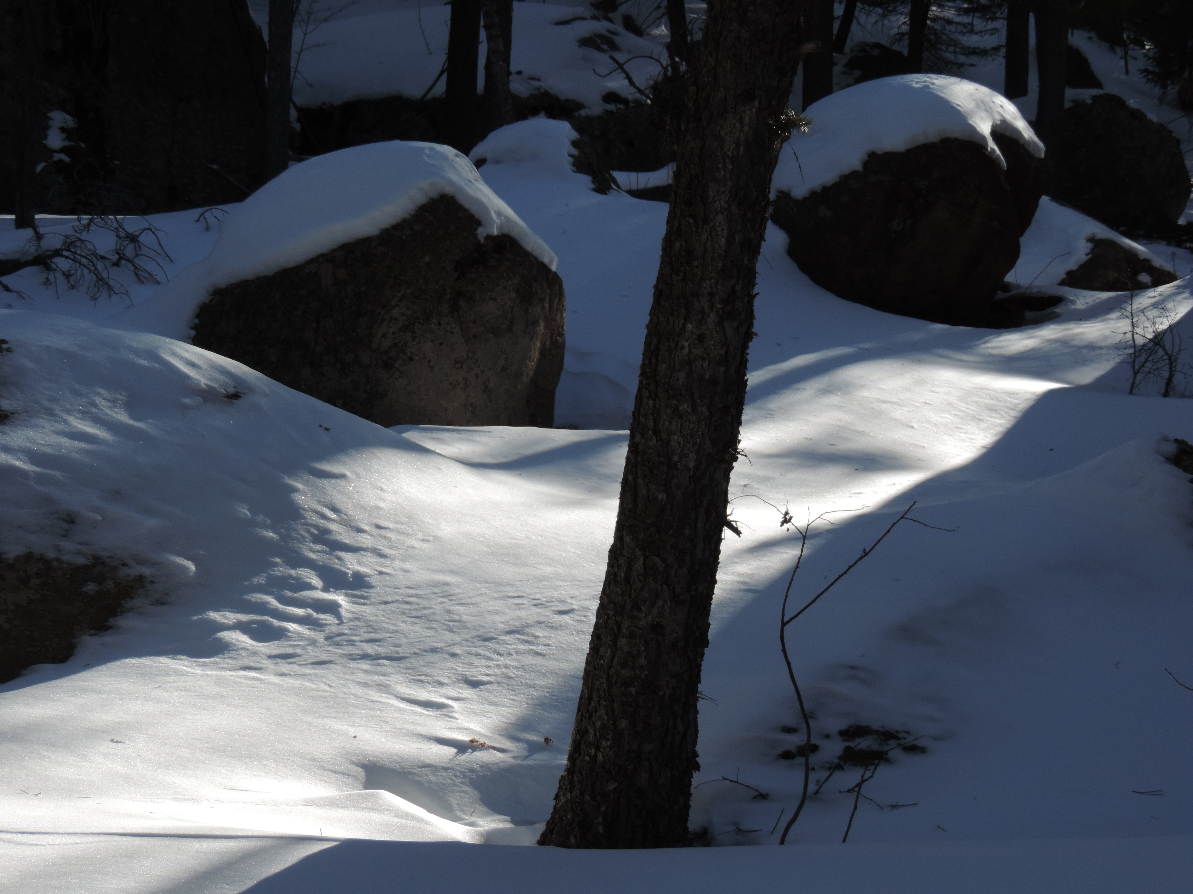 Cabin Journal: Shadows and Light, Once Again