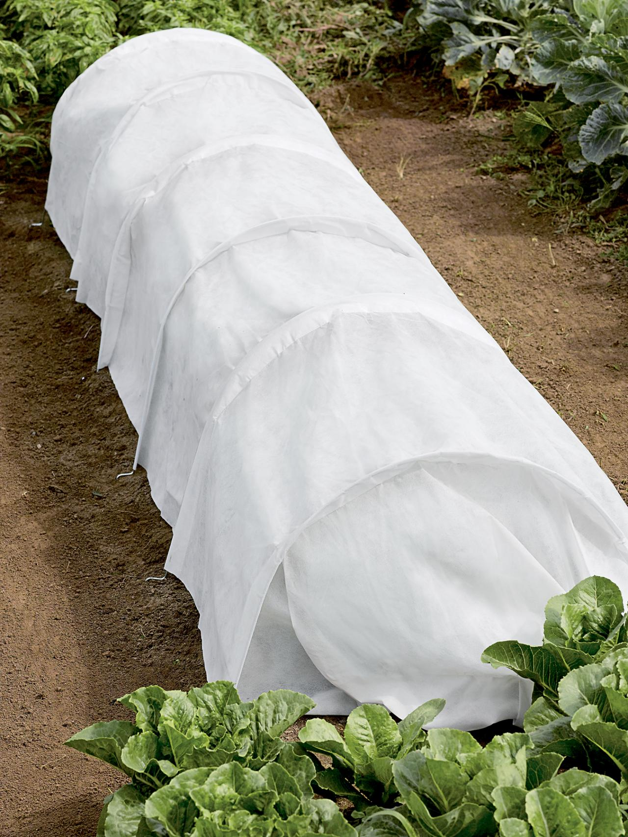Protect Plants With Row Covers | HGTV