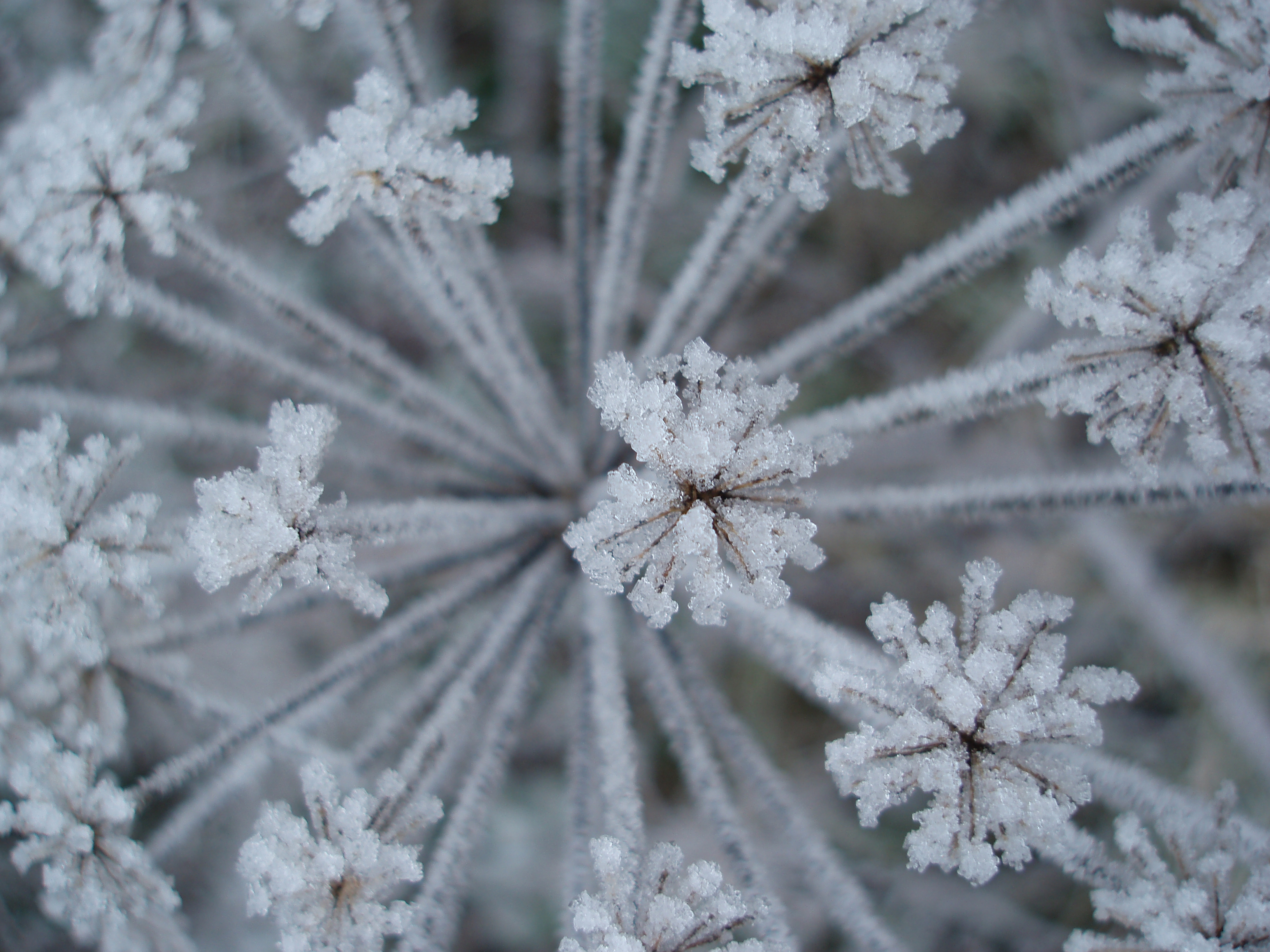 frost covered winter plants | Free backgrounds and textures | Cr103.com