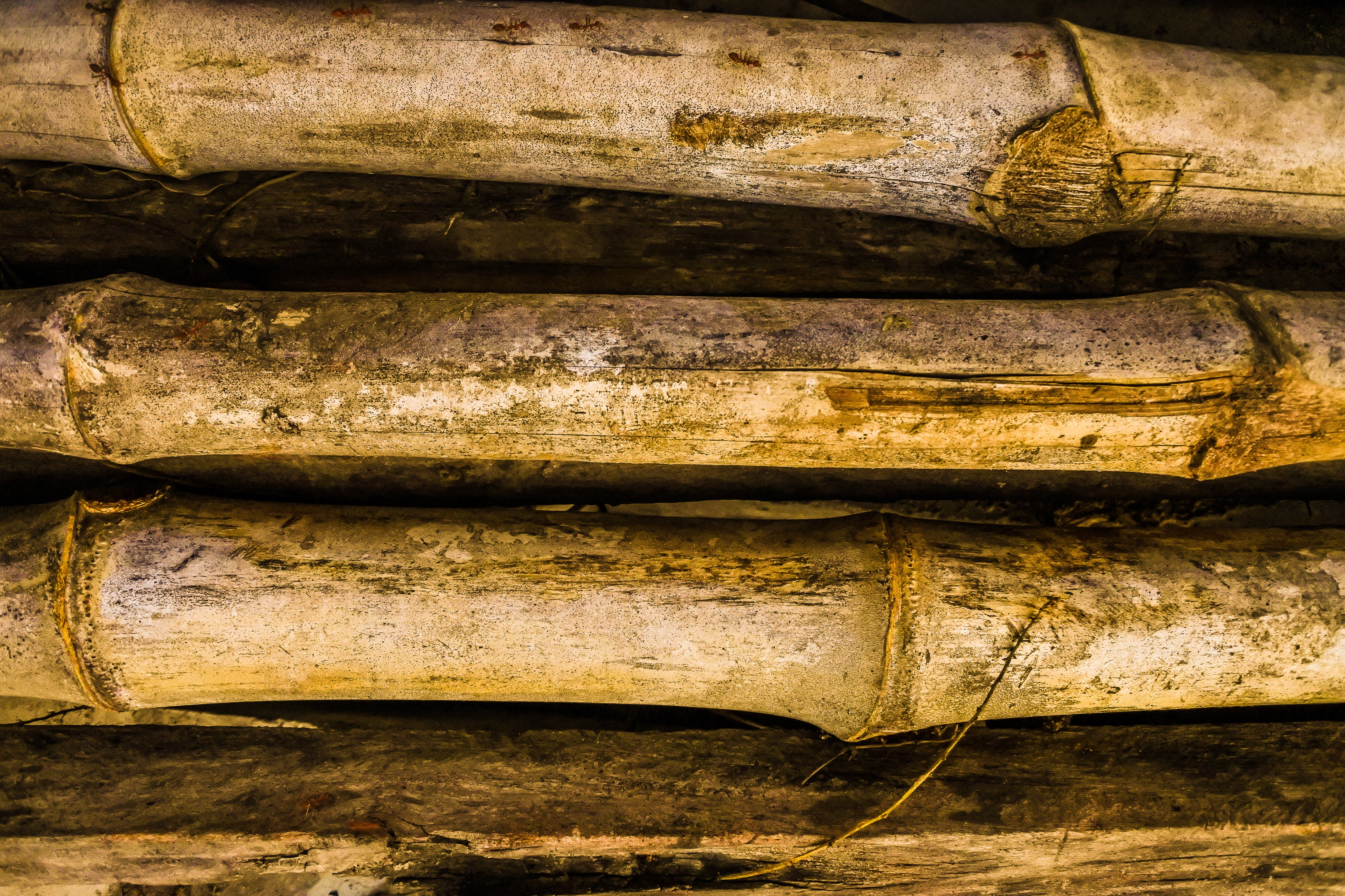 Four Brown Bamboo Grasses, Surface, Texture, Rustic, Rough, HQ Photo