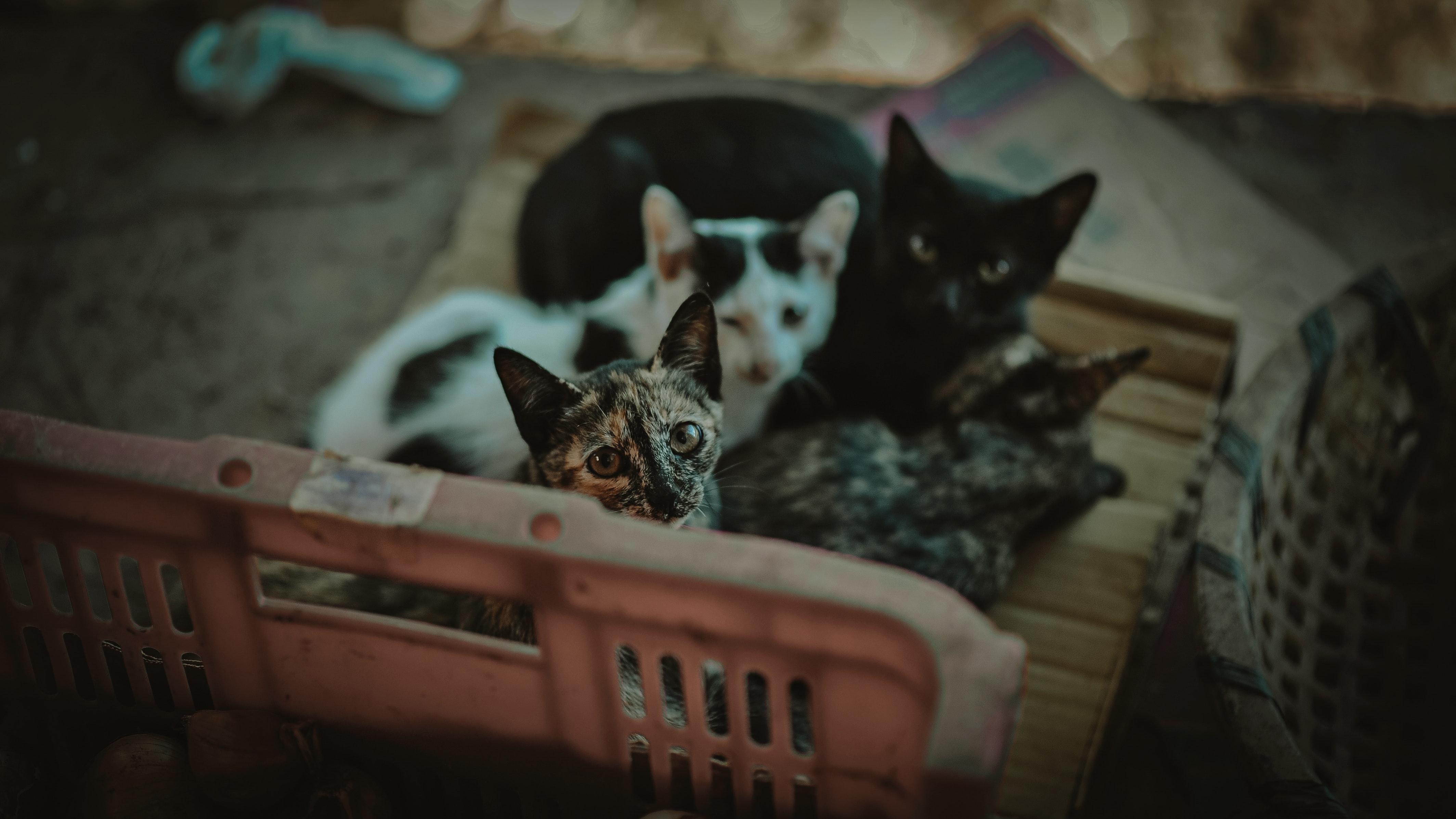 Four kittens photo
