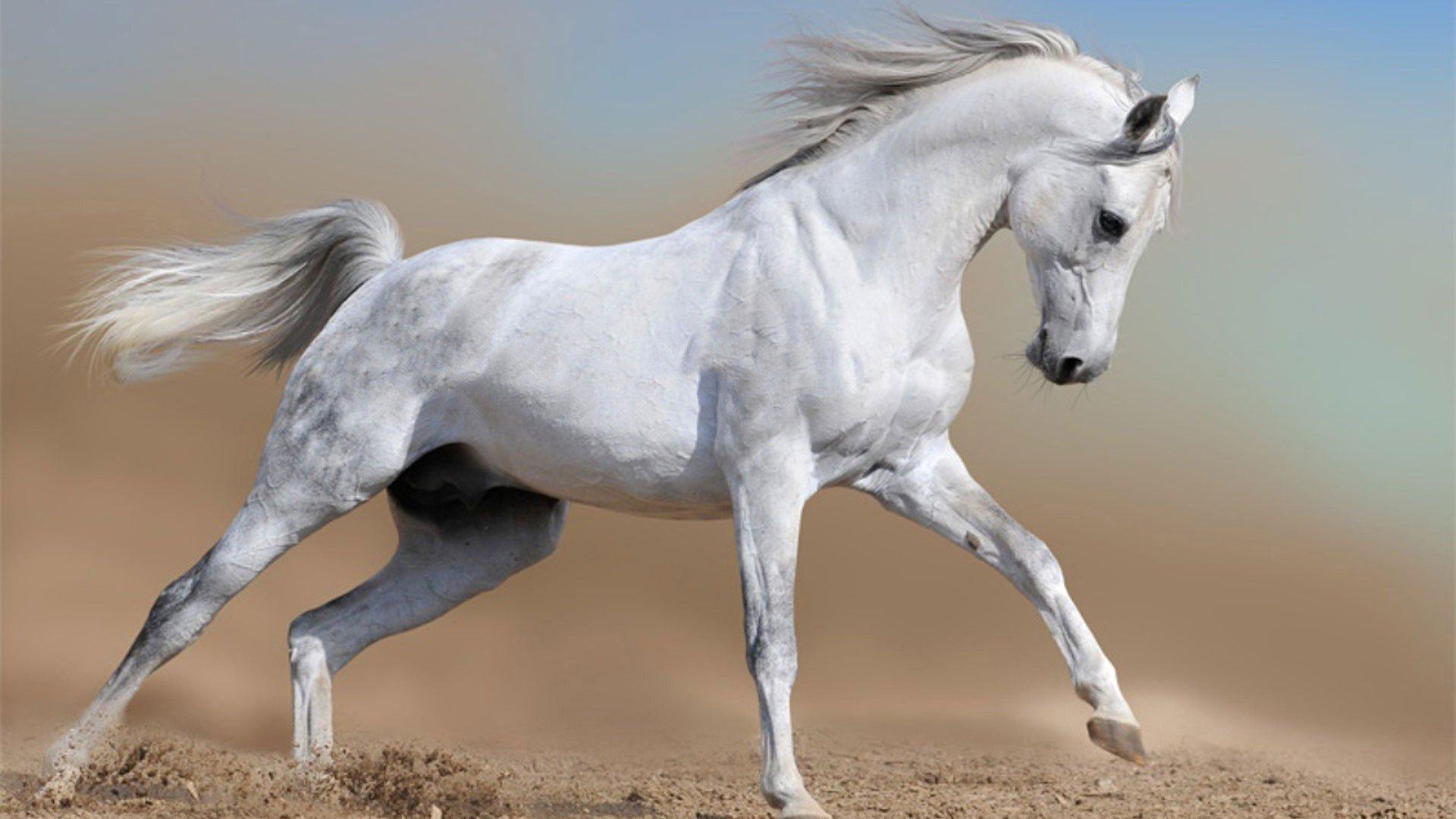 Horse Background Free #6959259