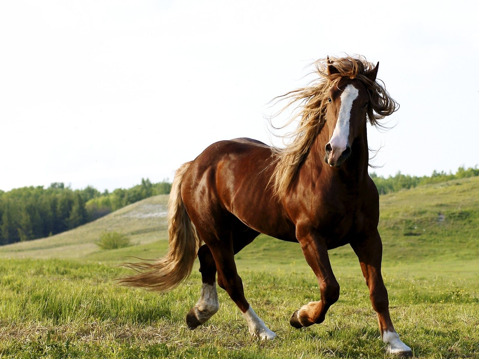 horseback riding | Horse Riding Brown Horse Running Free On The ...