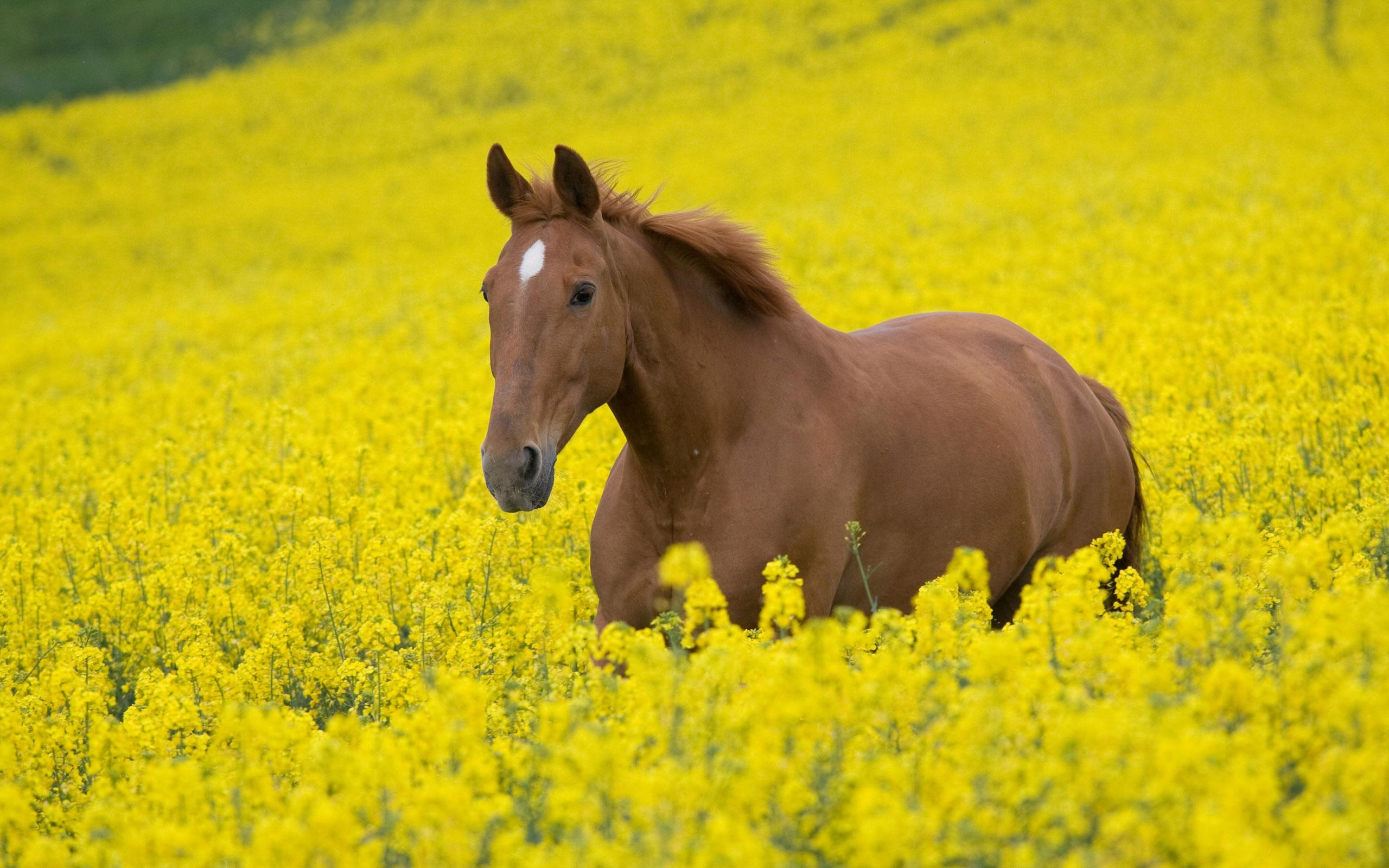 Free Horse Wallpaper 19888 2560x1600 px ~ HDWallSource.com