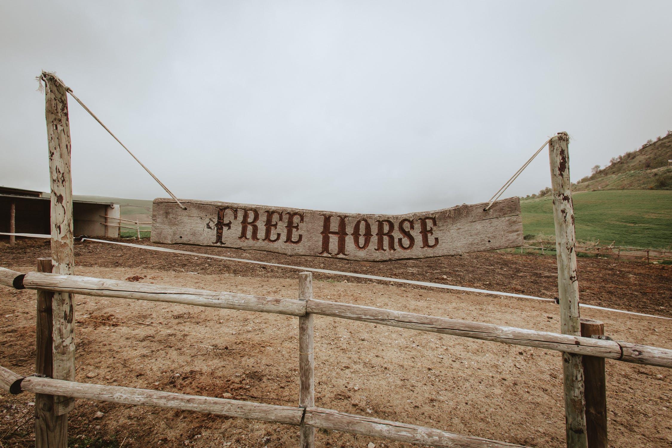free horse, free horse