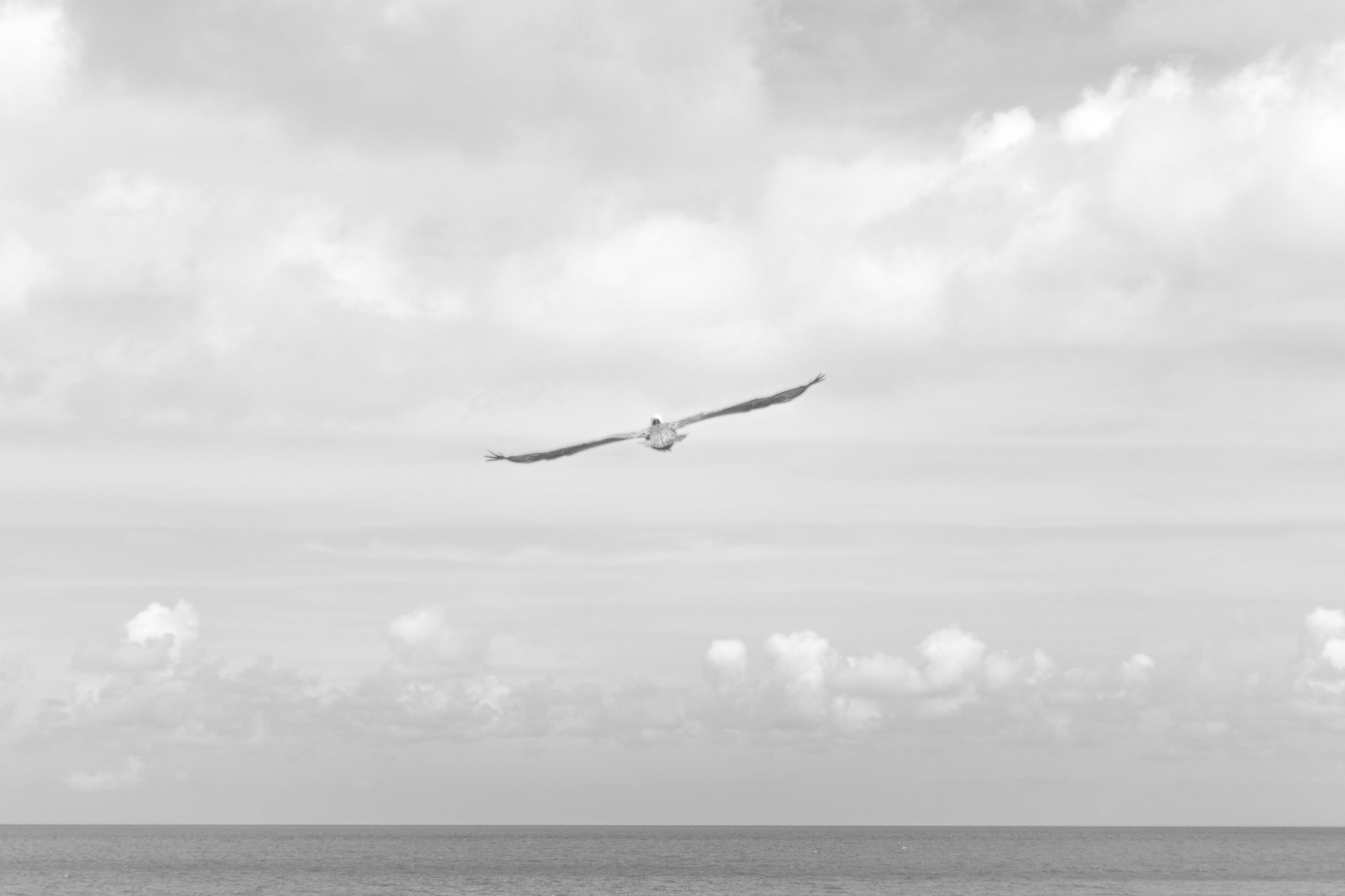 Freedom, Bird, Cloud, Cloudy, Flow, HQ Photo