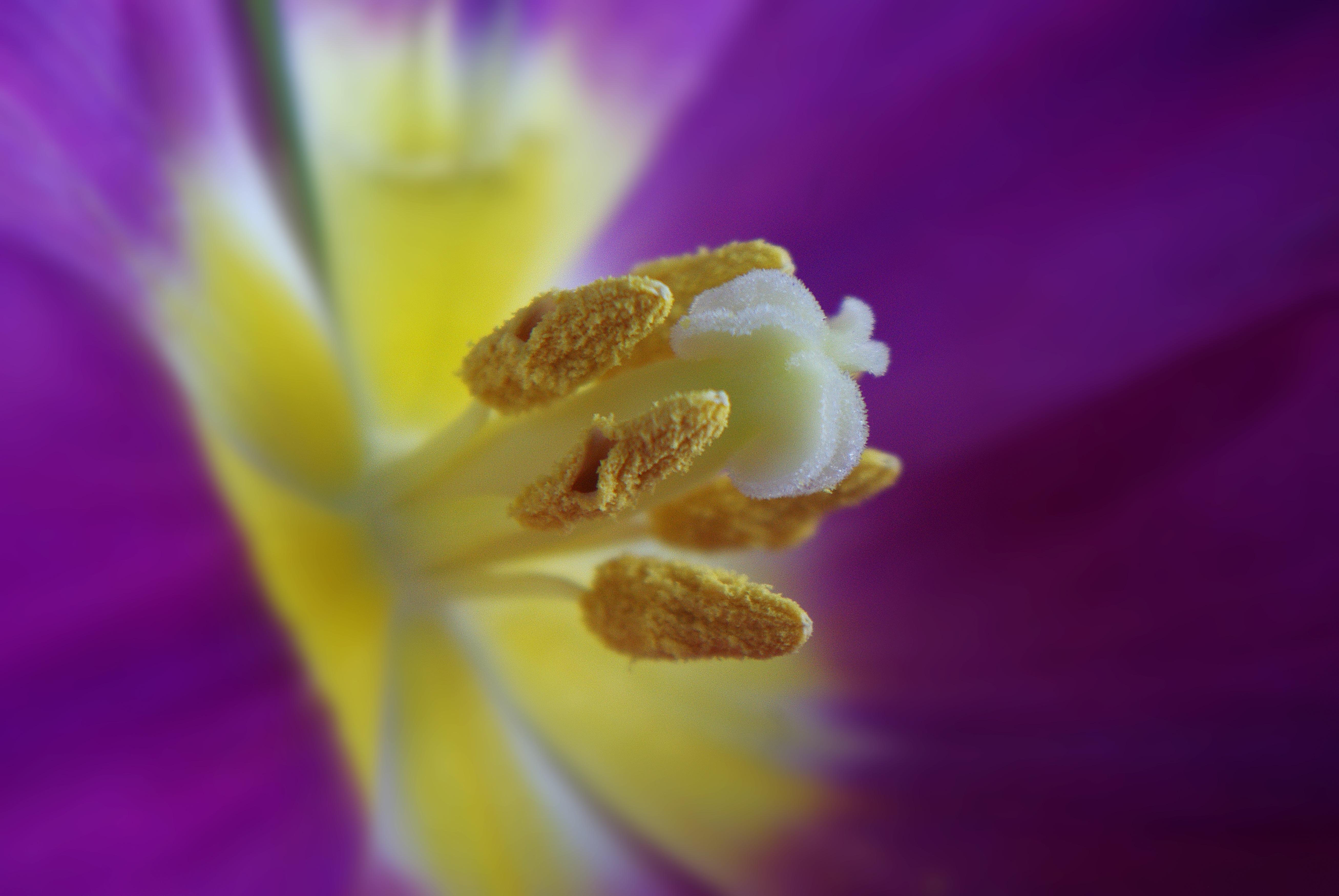 Fresh, Beauty, Flower, Freshness, Nature, HQ Photo