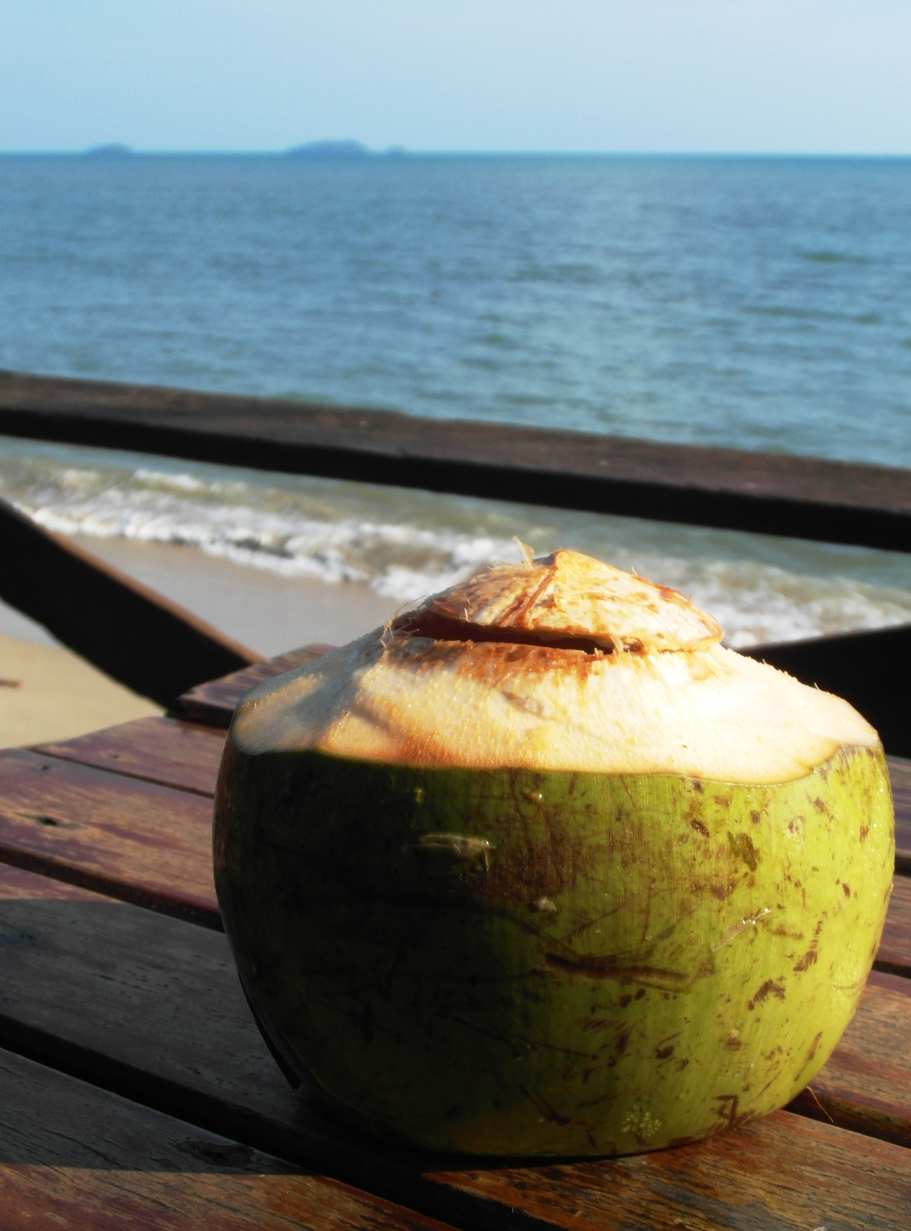 Fresh coconut drink by the ocean photo