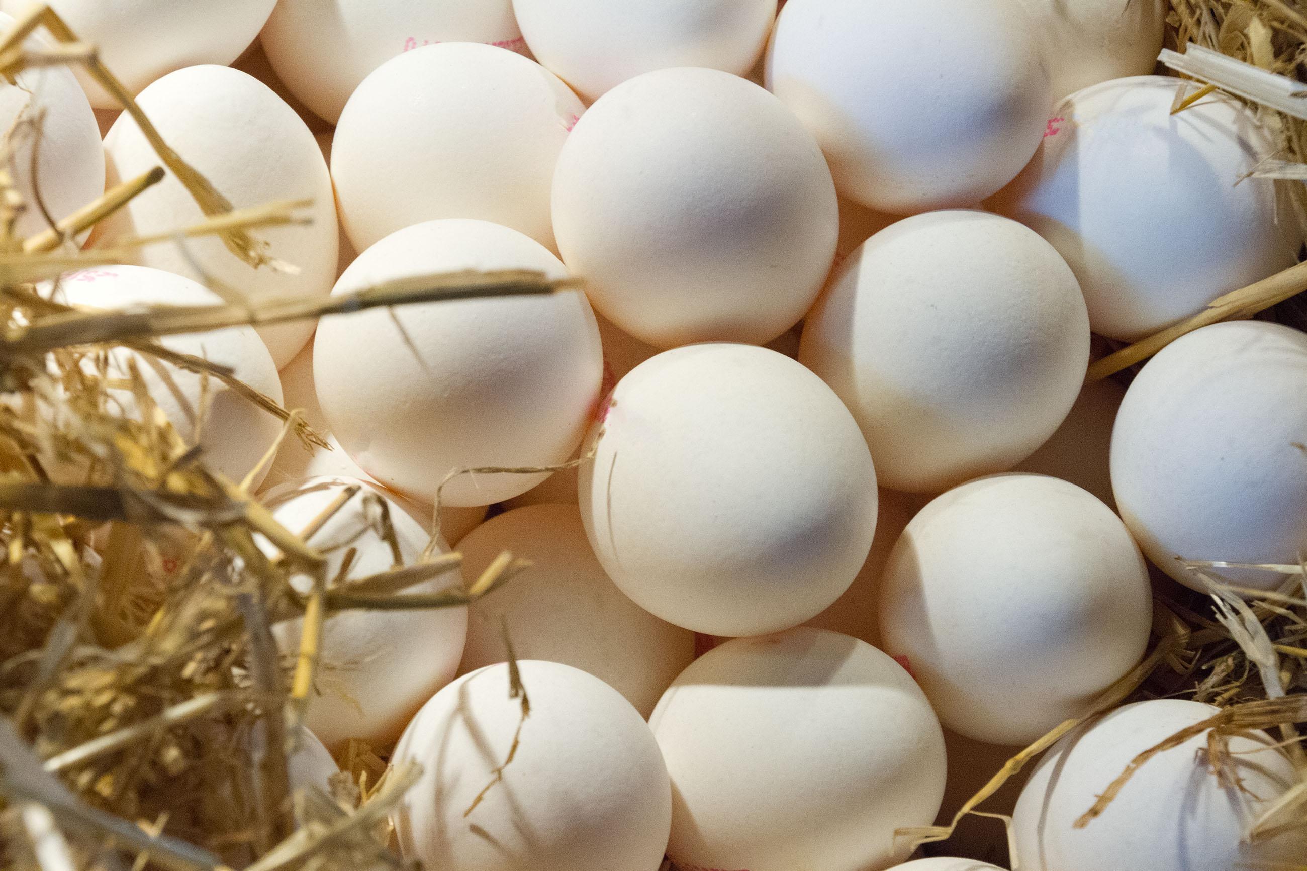 Fresh eggs on straw photo