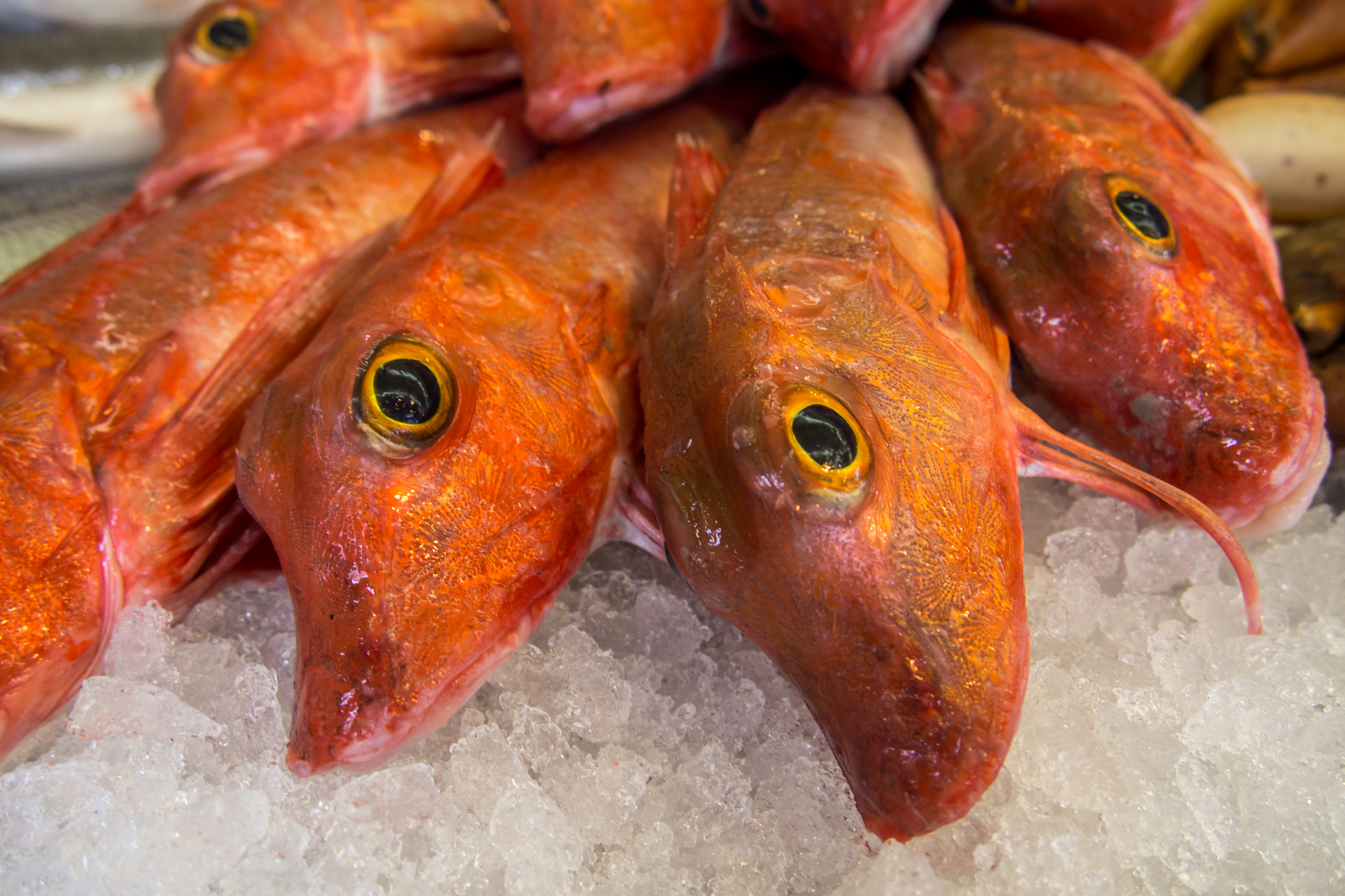 Fresh fishes in a market photo