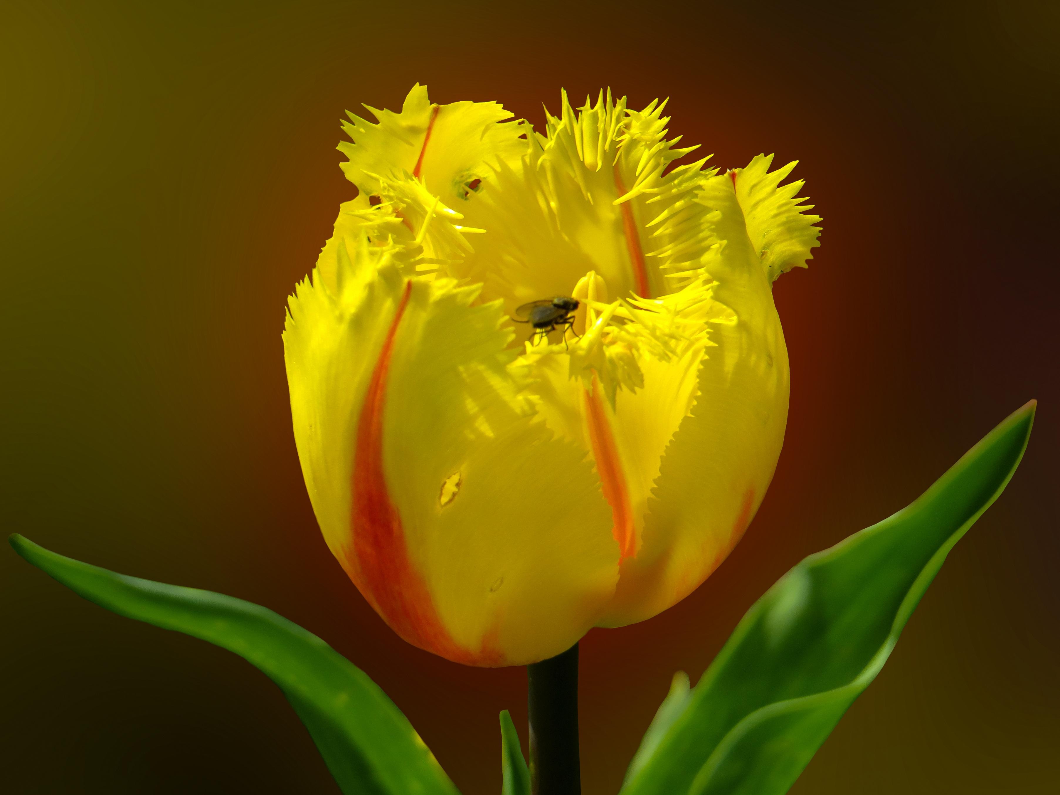 Fresh flower photo