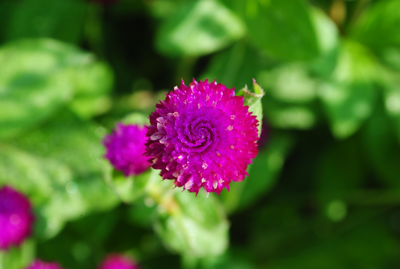 Fresh Flower, Blooming, Flower, Fragrance, Fresh, HQ Photo