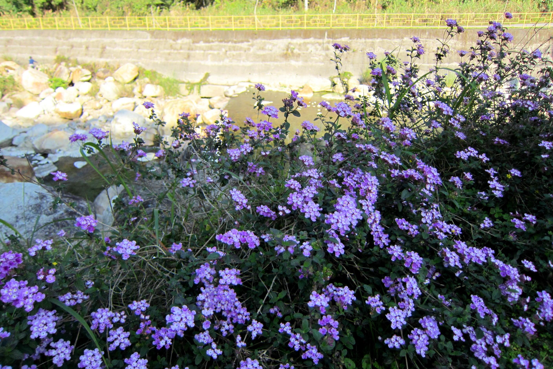 Fresh Flowers, Blooming, Flower, Fragrance, Fresh, HQ Photo