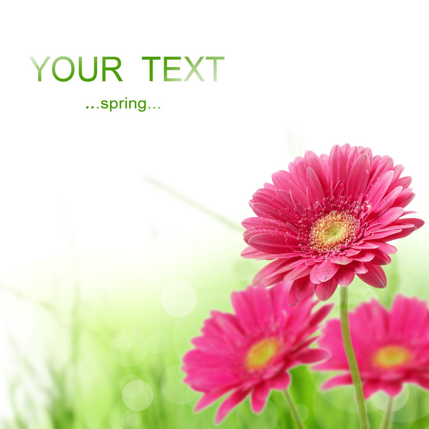 Fresh flowers 27178 - Flower Wallpapers - Flowers