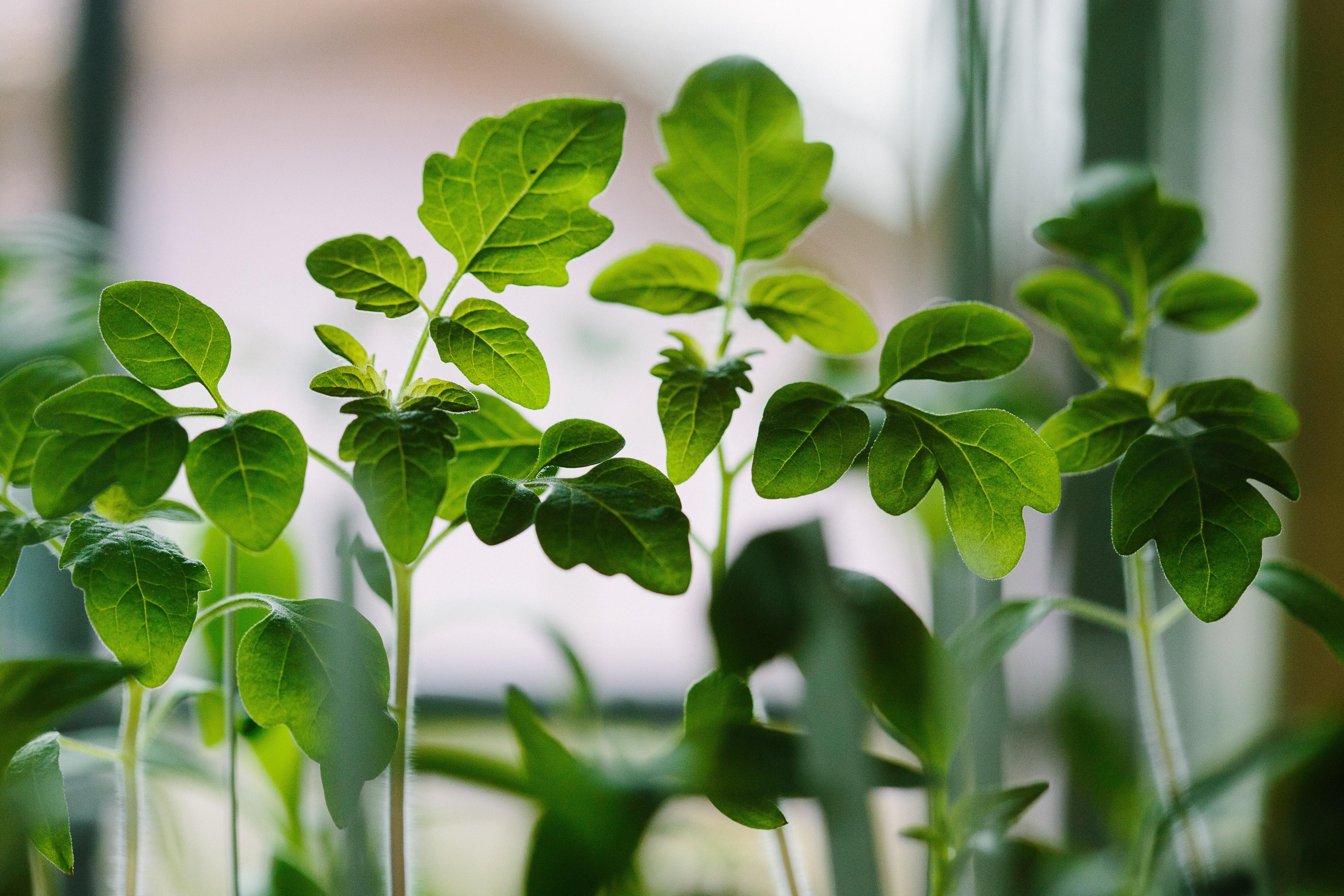 Fresh Plants, plant, nature, lush, green, HQ Photo