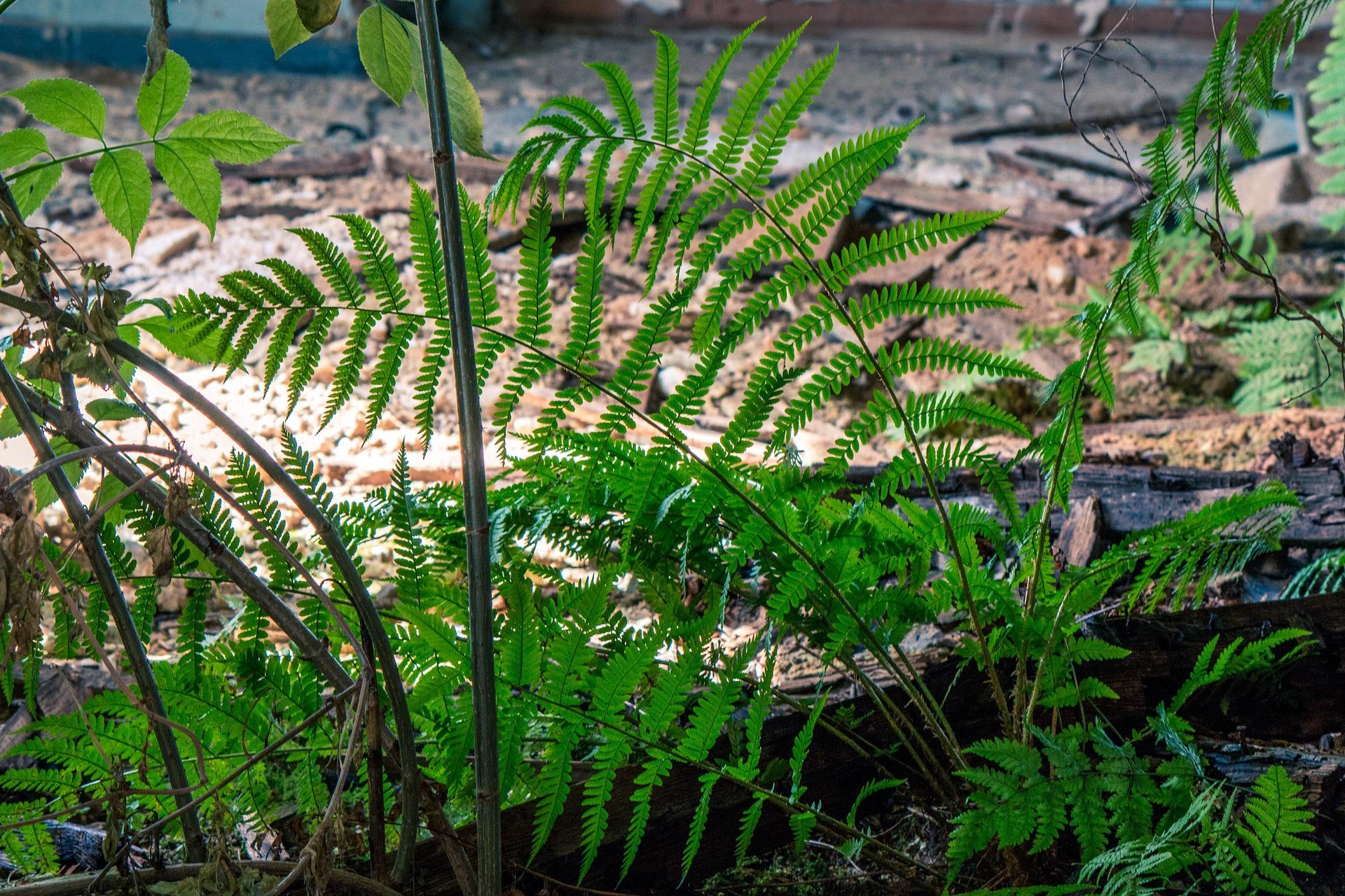 Fresh plants photo