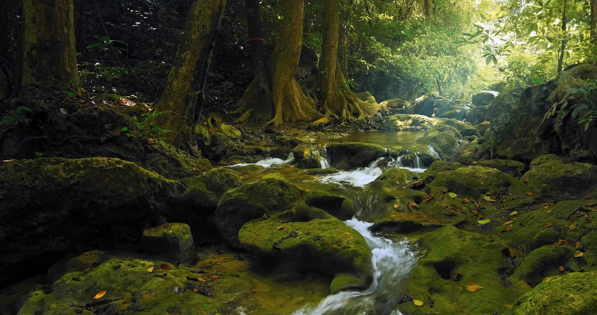 Fresh water stream flows among green mossy rocks and stones in ...