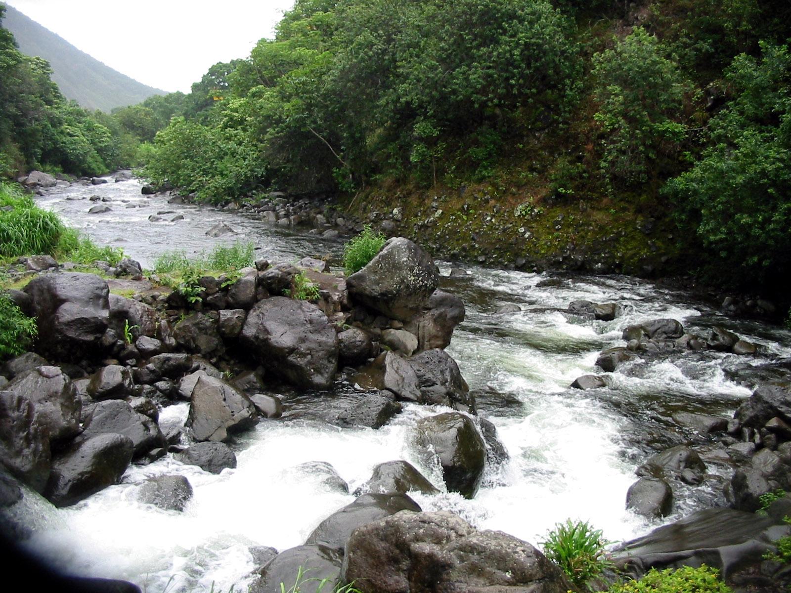 River ecosystem - Wikipedia