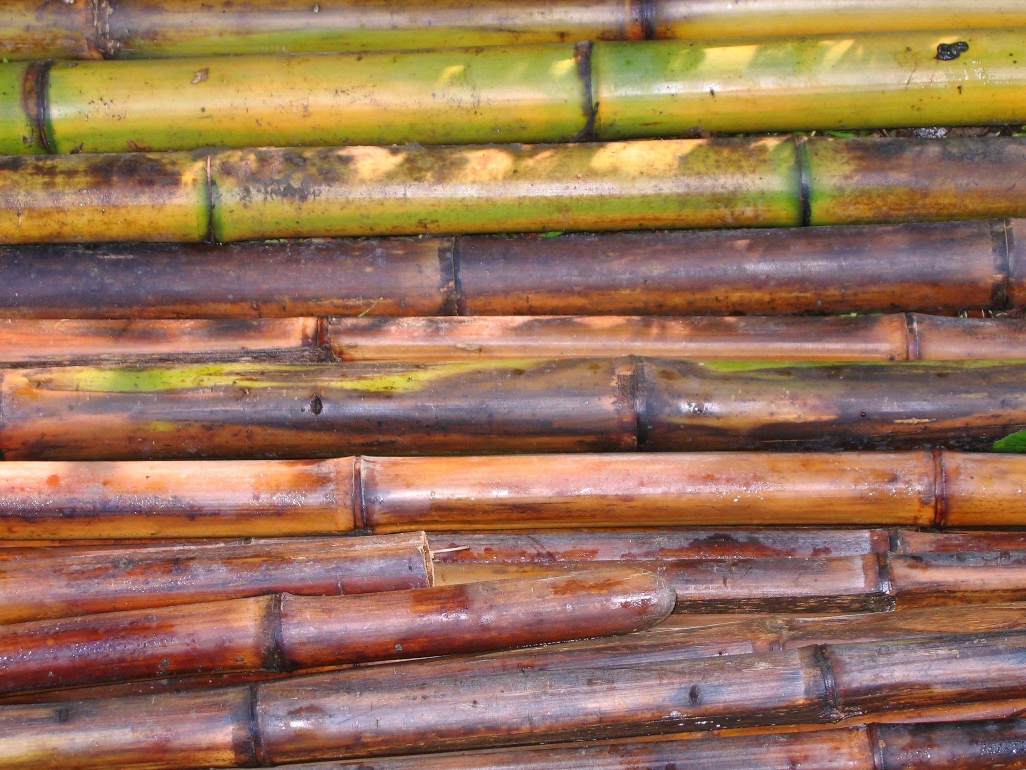 Freshly Cut Bamboo Poles, Asia, Pole, Weight, Useful, HQ Photo