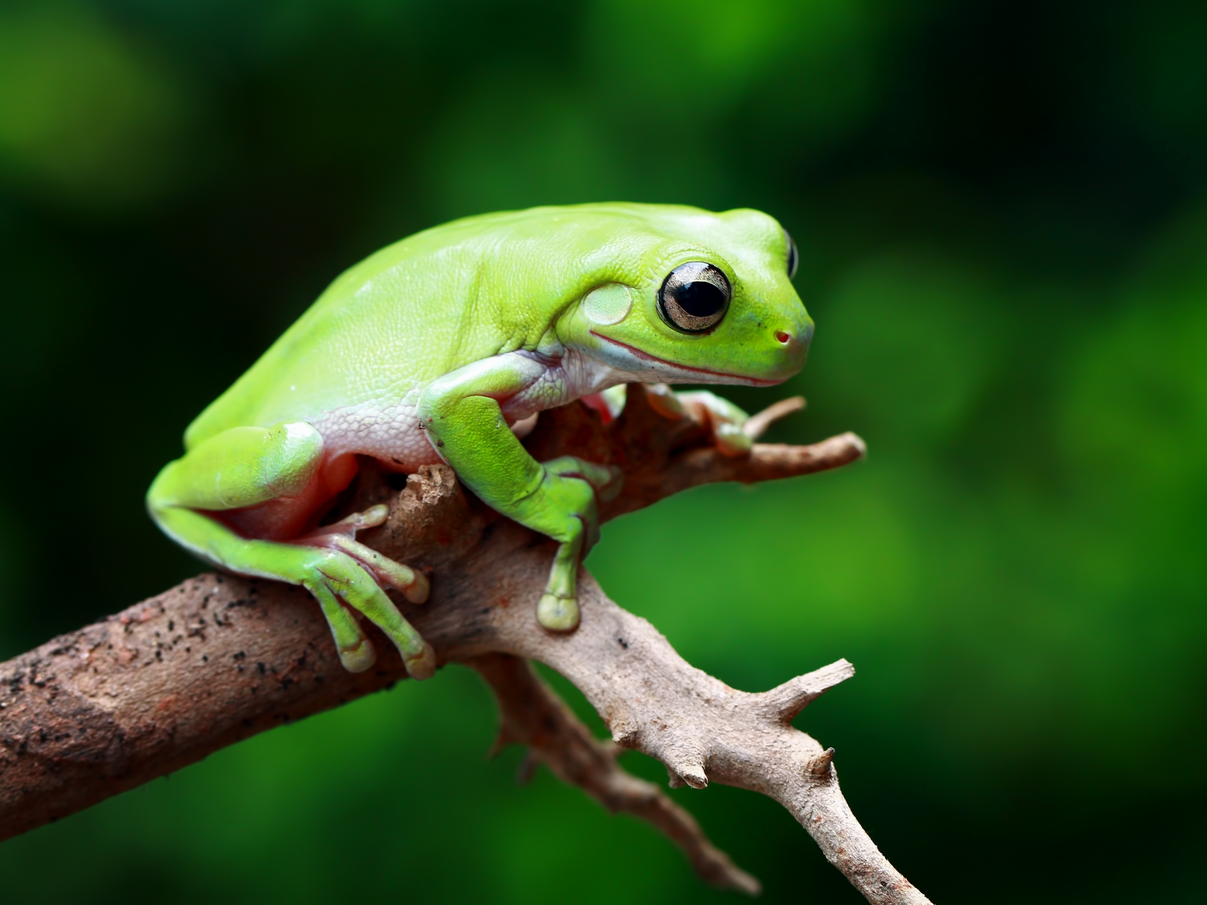 A traveling frog exposes concerns within Apple's Chinese App Store ...