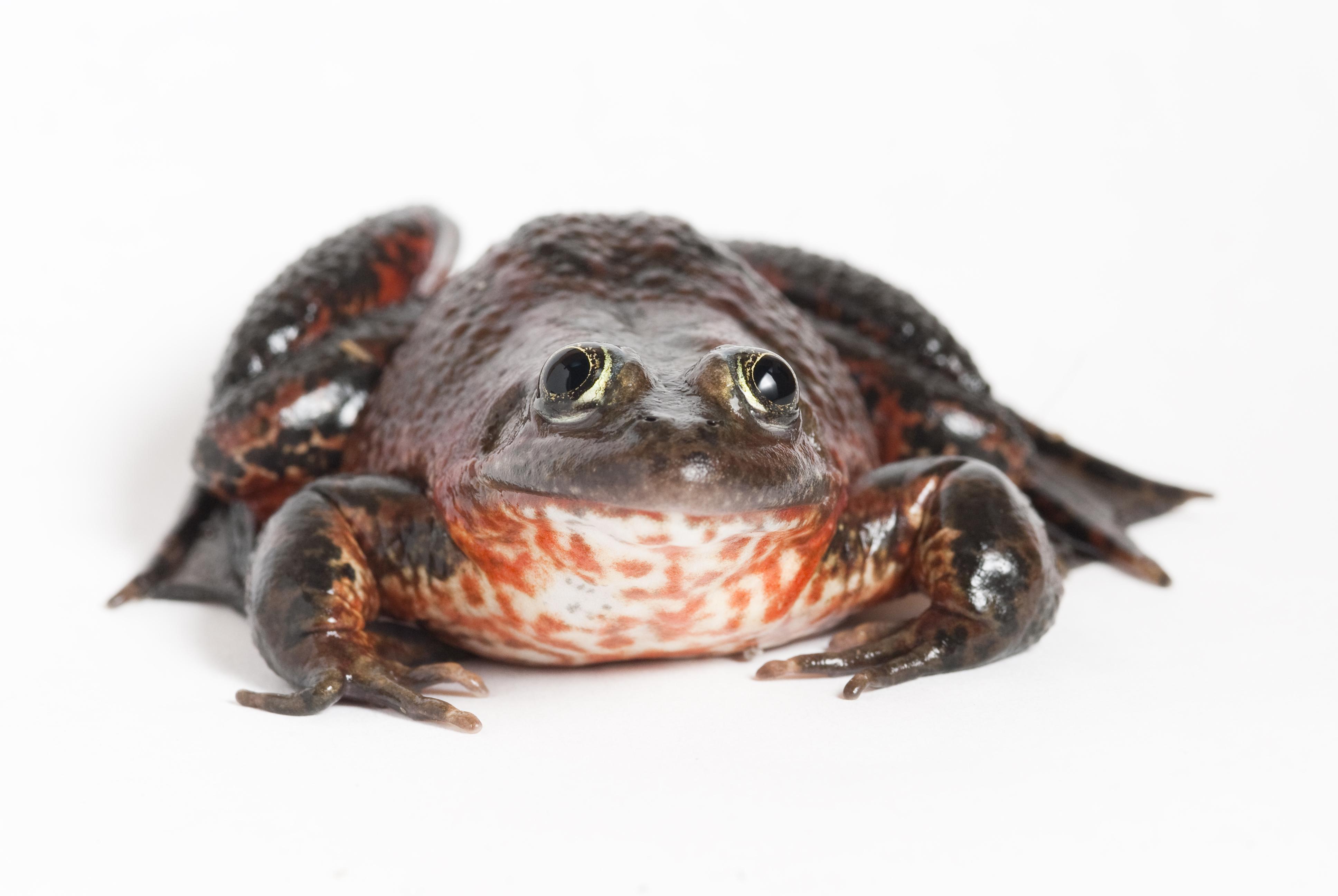frog | Oregon Zoo