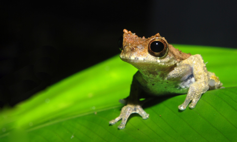 after Stanley Kubrick, a new species of frog is a 'clockwork orange ...