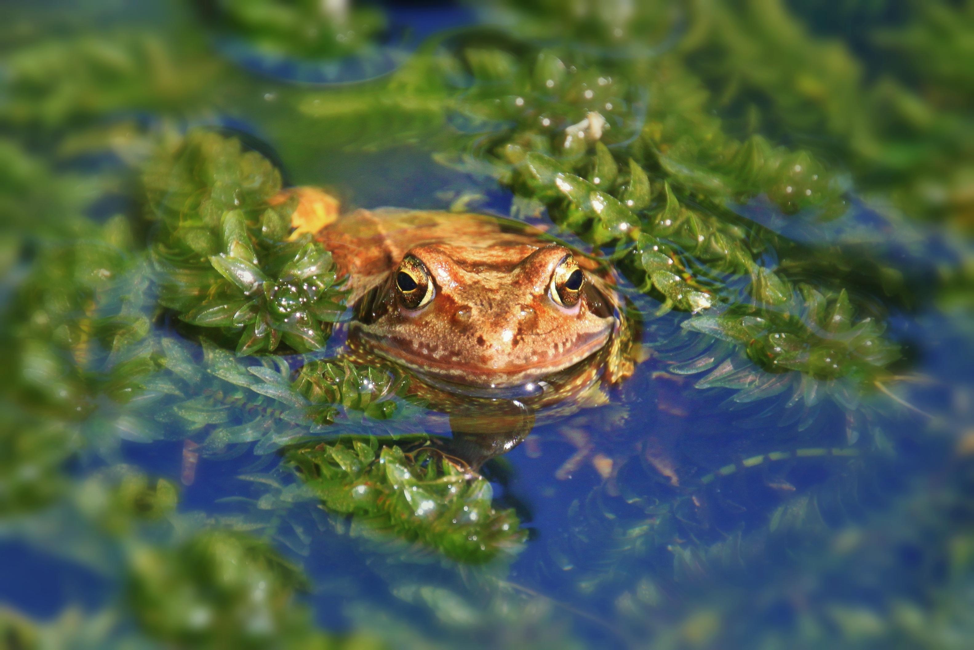 Frog, Animal, Lake, River, Water, HQ Photo