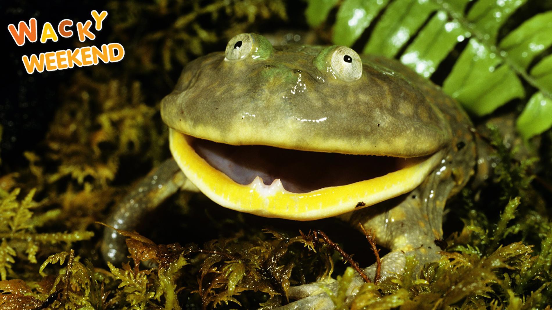 Wacky Weekend: Frogs