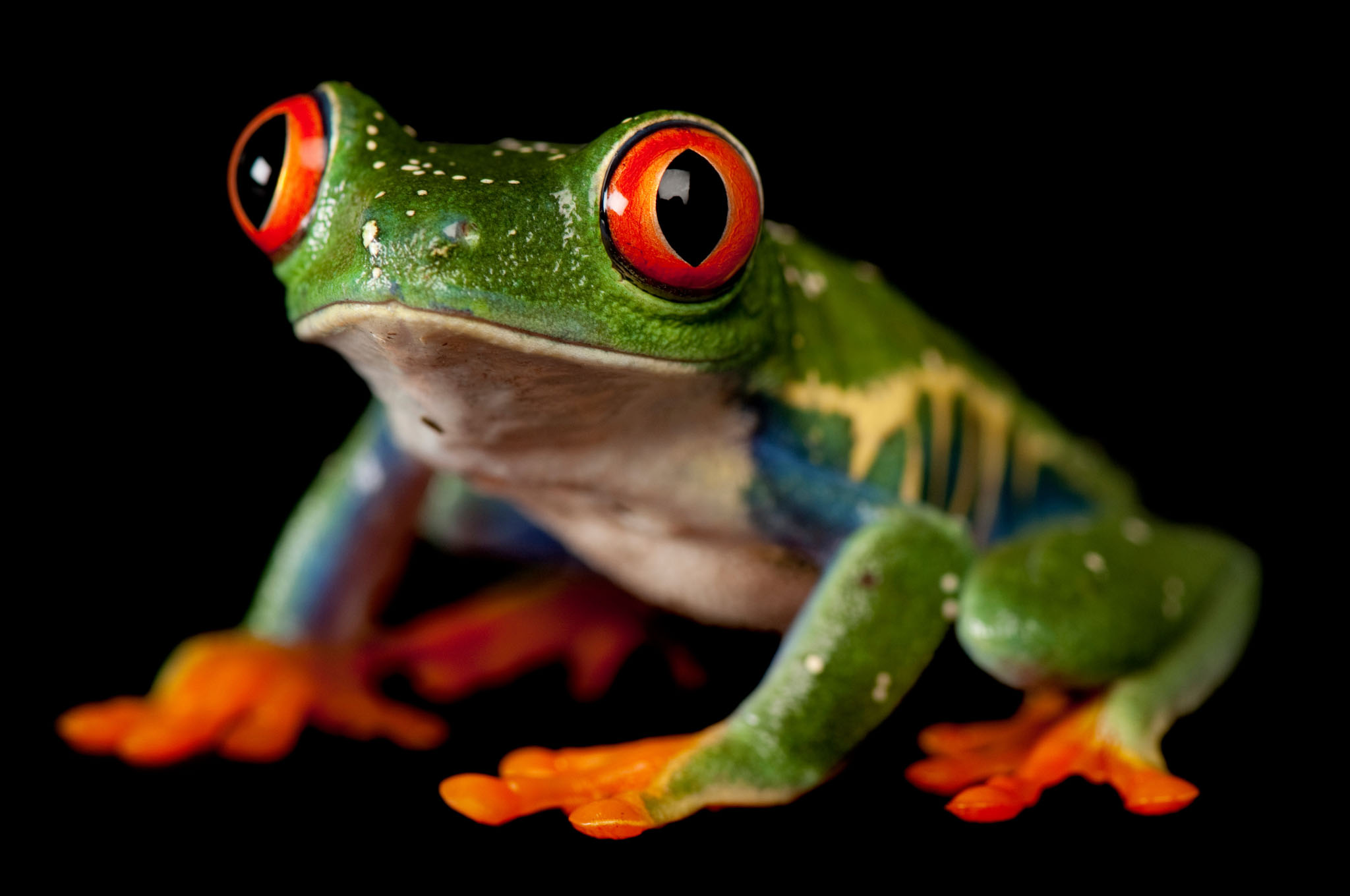 13 Gorgeous Pictures Remind Us Why Frogs Need Our Help