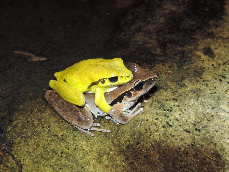 frogs | Popular Science