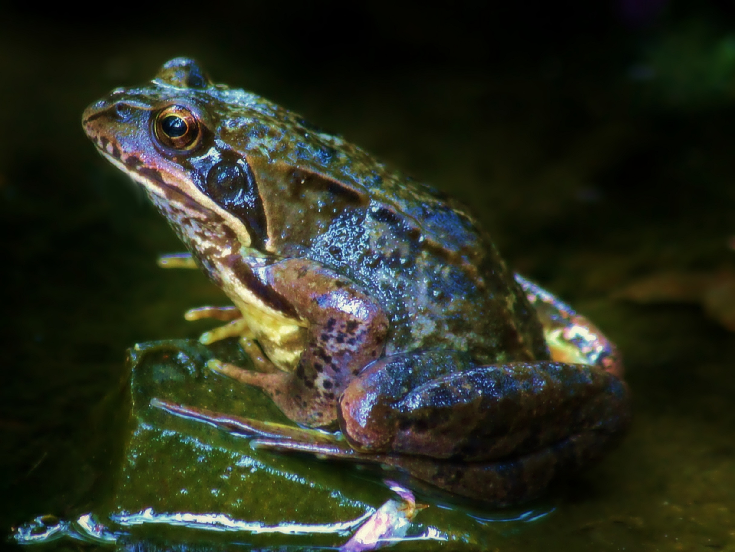 Frog, Animal, Nature, HQ Photo