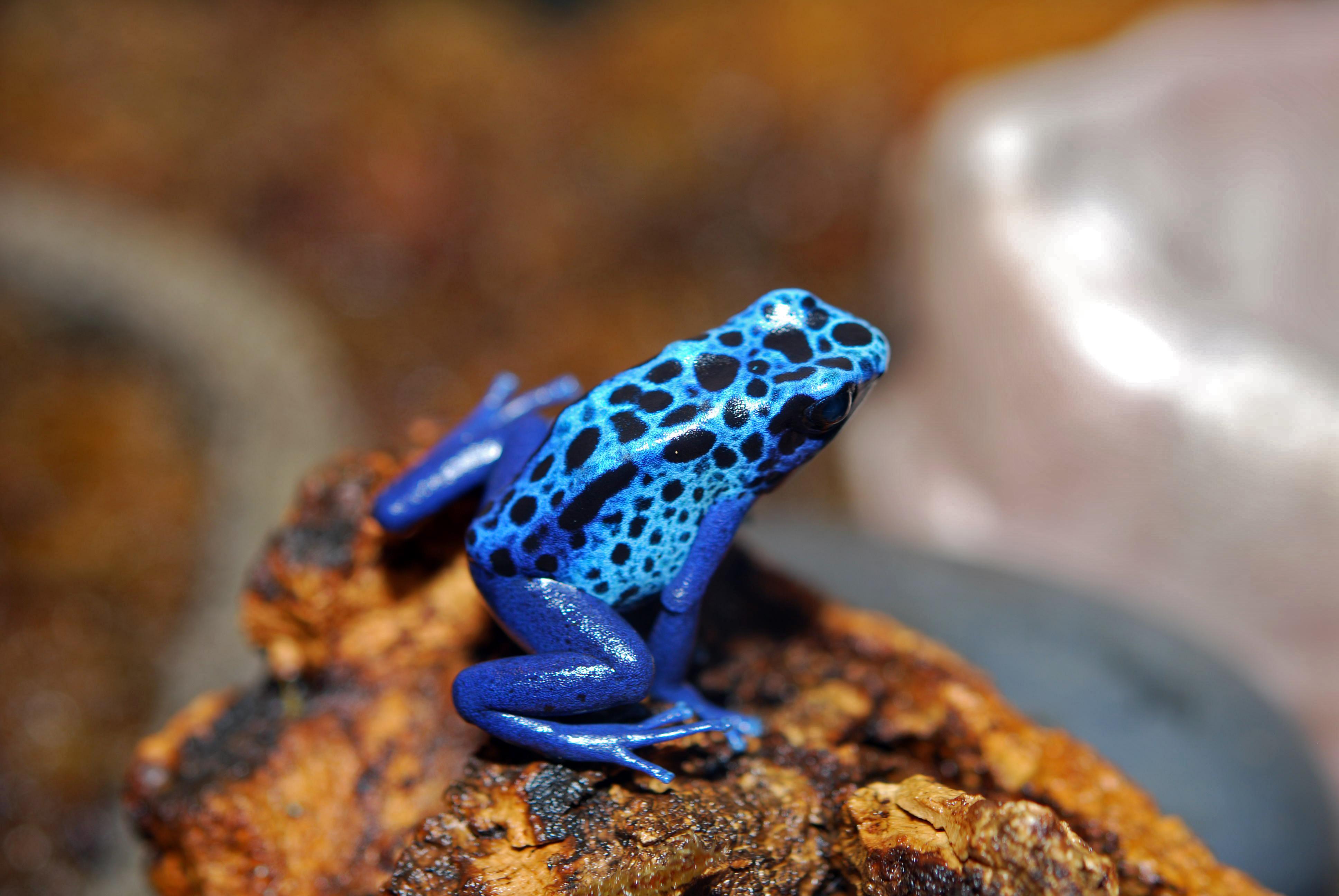 Amphibians & Reptiles - Mystic Aquarium