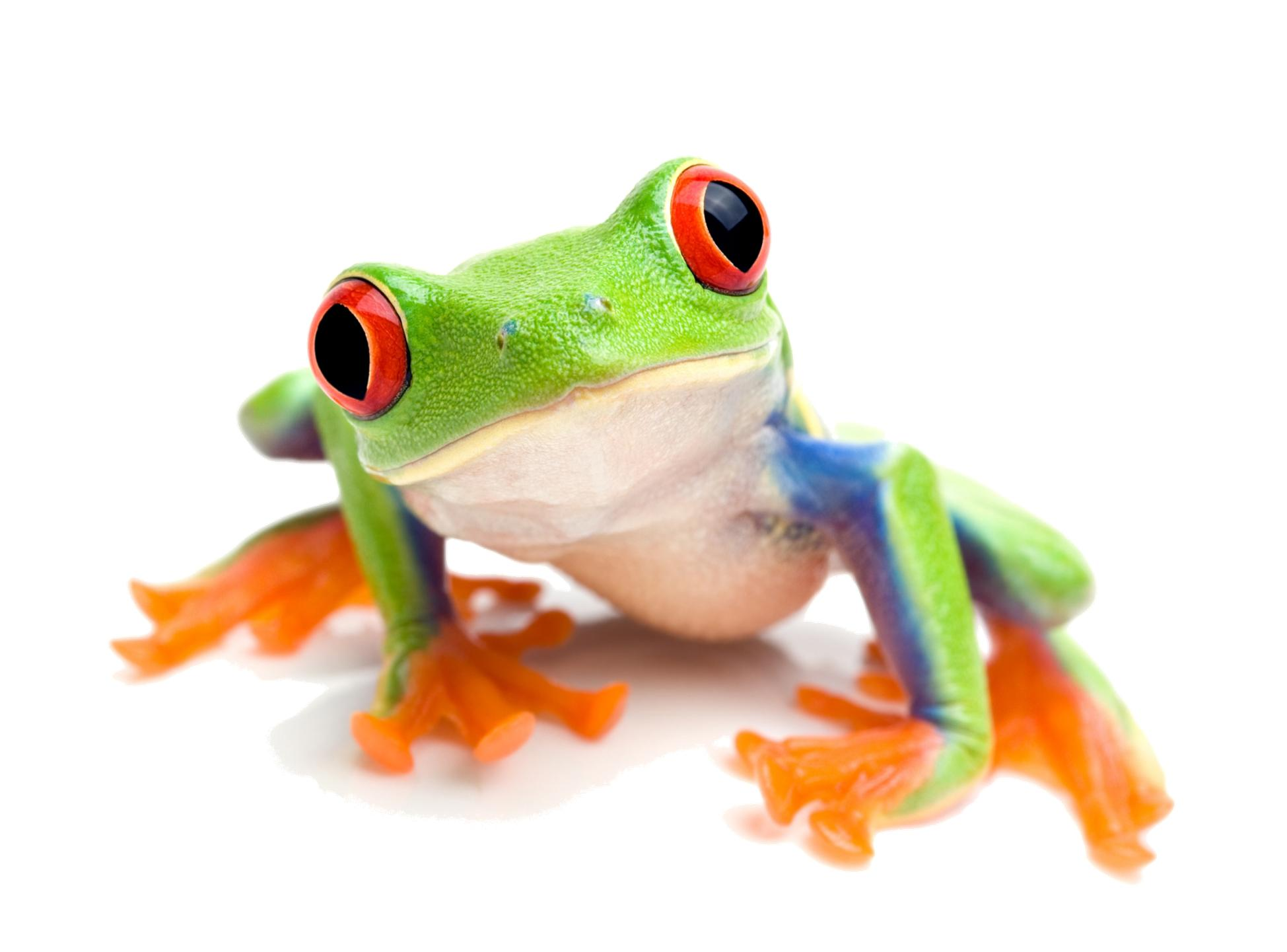 F Is For Frog by Maria Jose Garcia