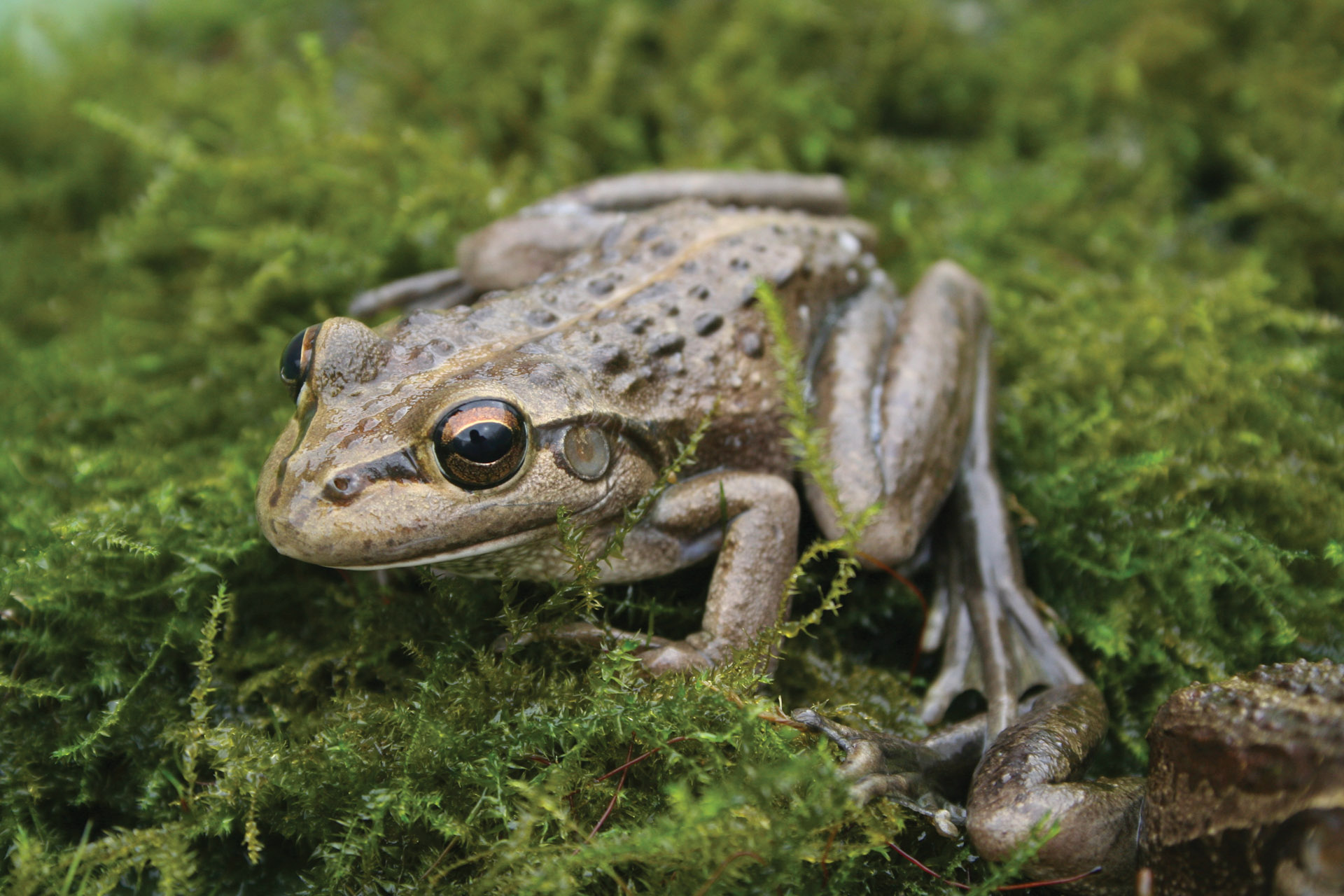 Frog-friendly Garden | Perth Zoo