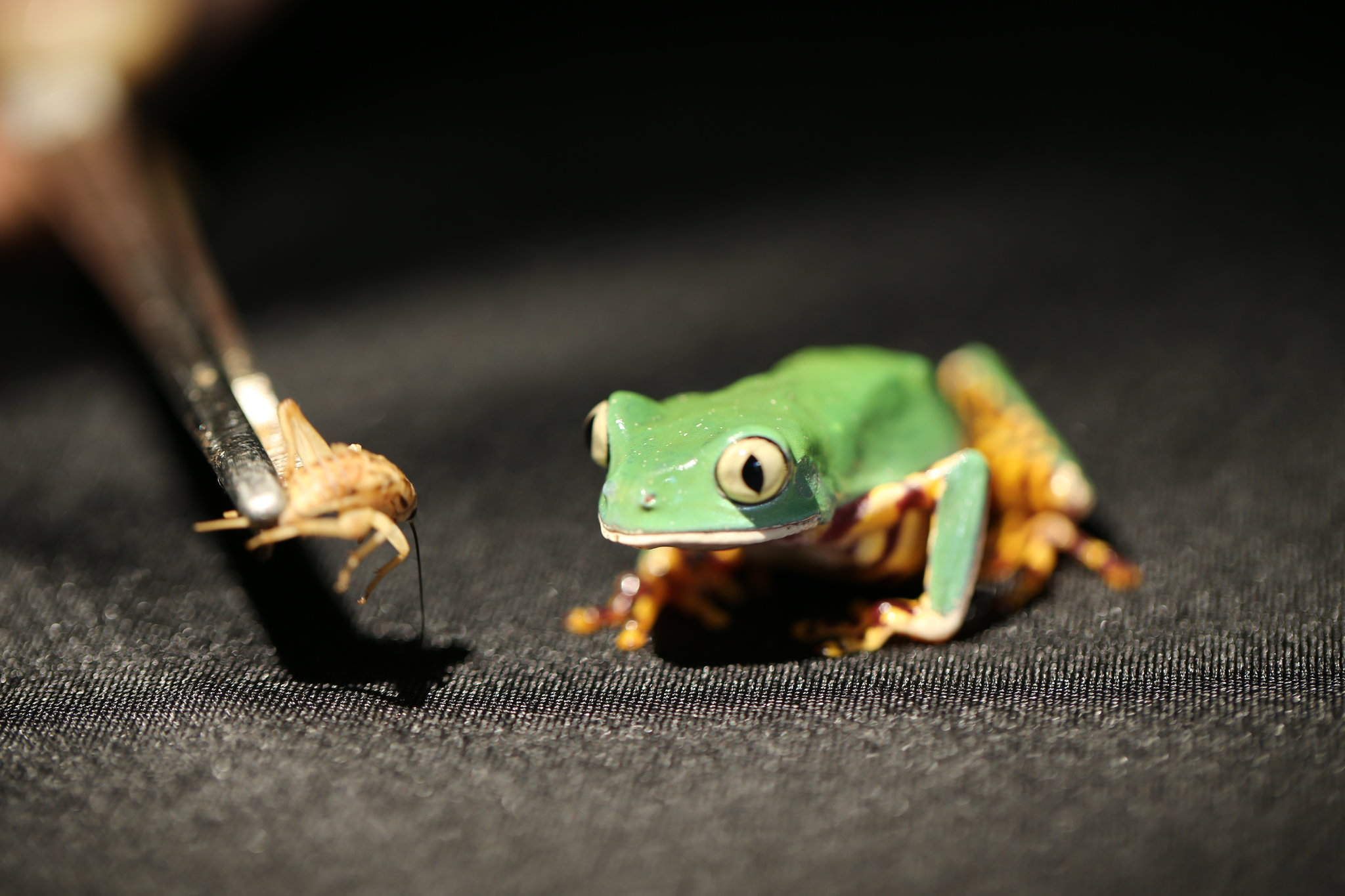 The Power of Frog Spit - Video - NYTimes.com